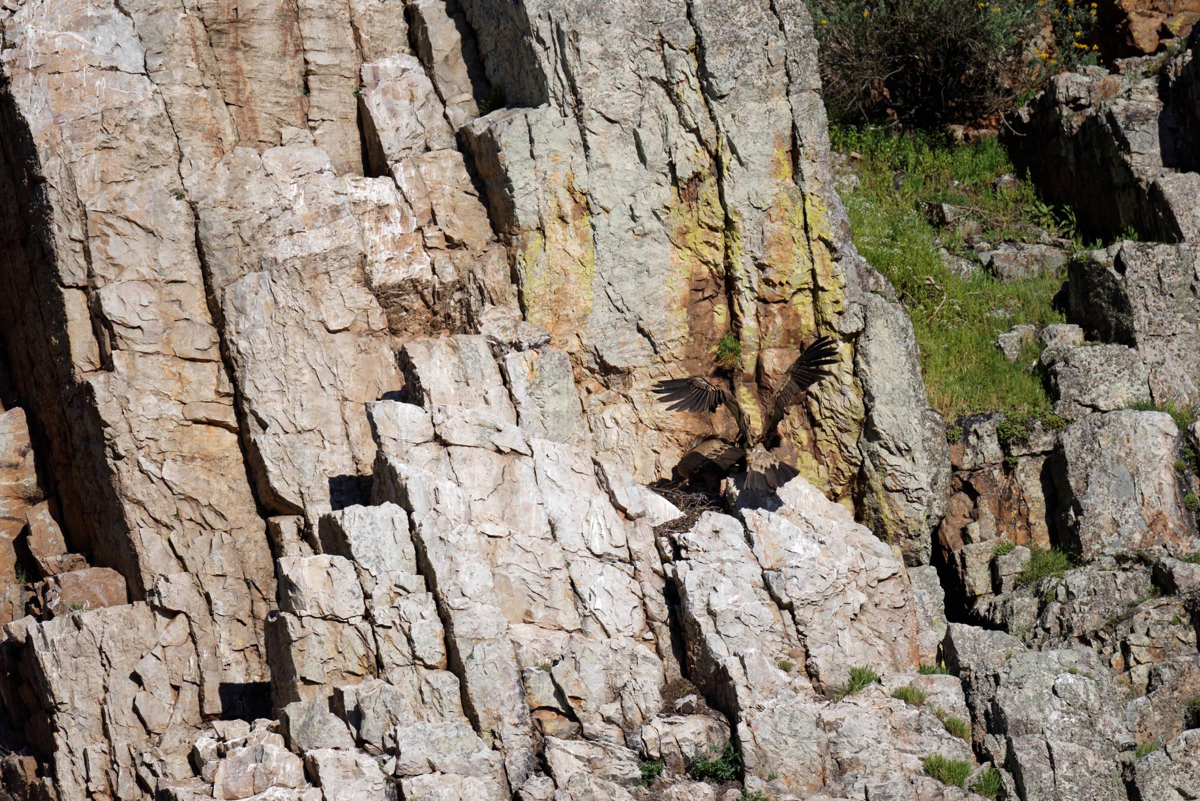 160405-parc national de monfrague (Estremadure) (122)_1