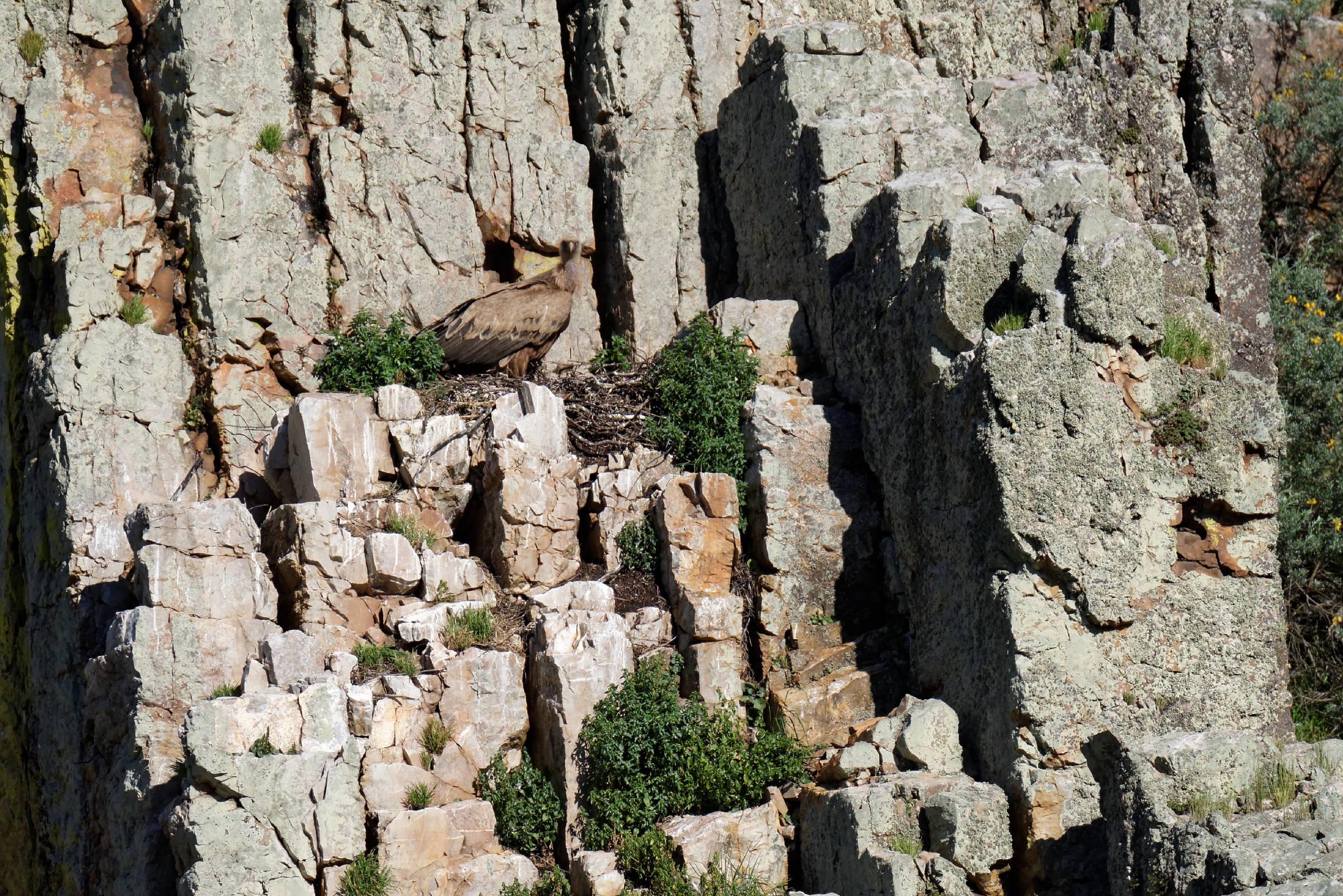 160405-parc national de monfrague (Estremadure) (123)