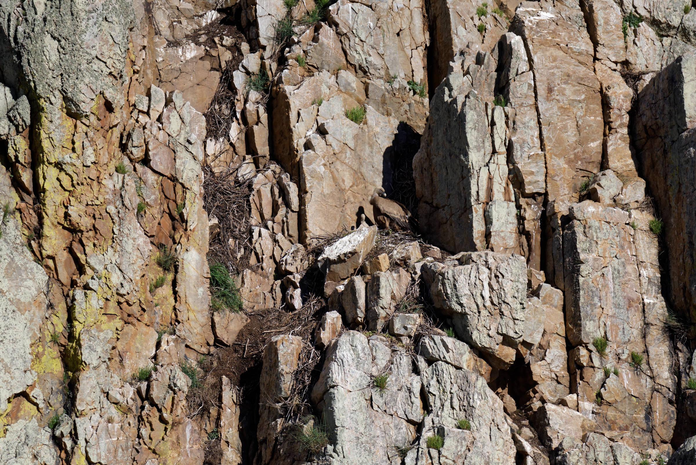 160405-parc national de monfrague (Estremadure) (126)