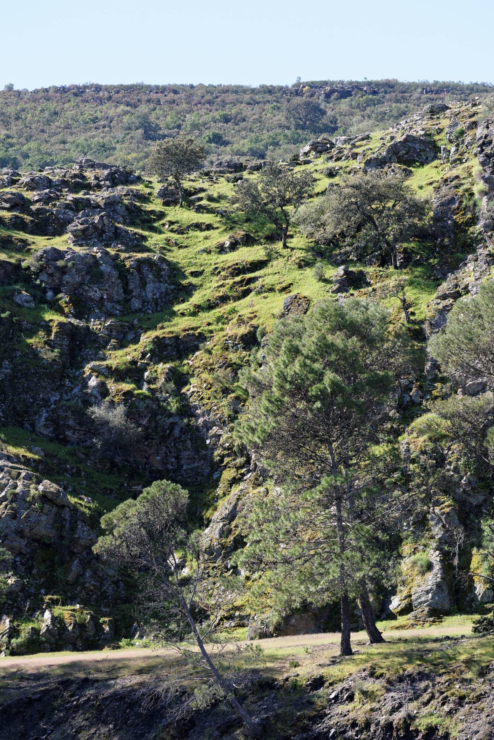 160405-parc national de monfrague (Estremadure) (147)