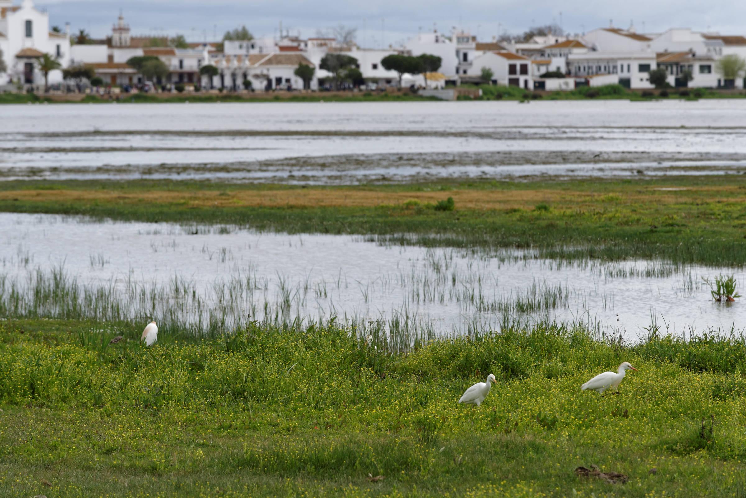 160409-El Rocio (Andalousie) (1138)