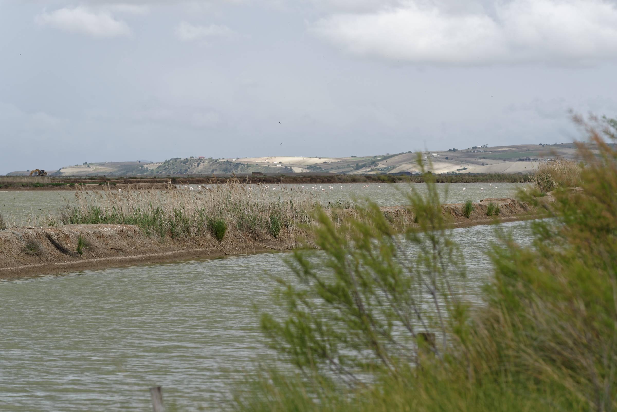160412-La Algaida (Andalousie) (108)