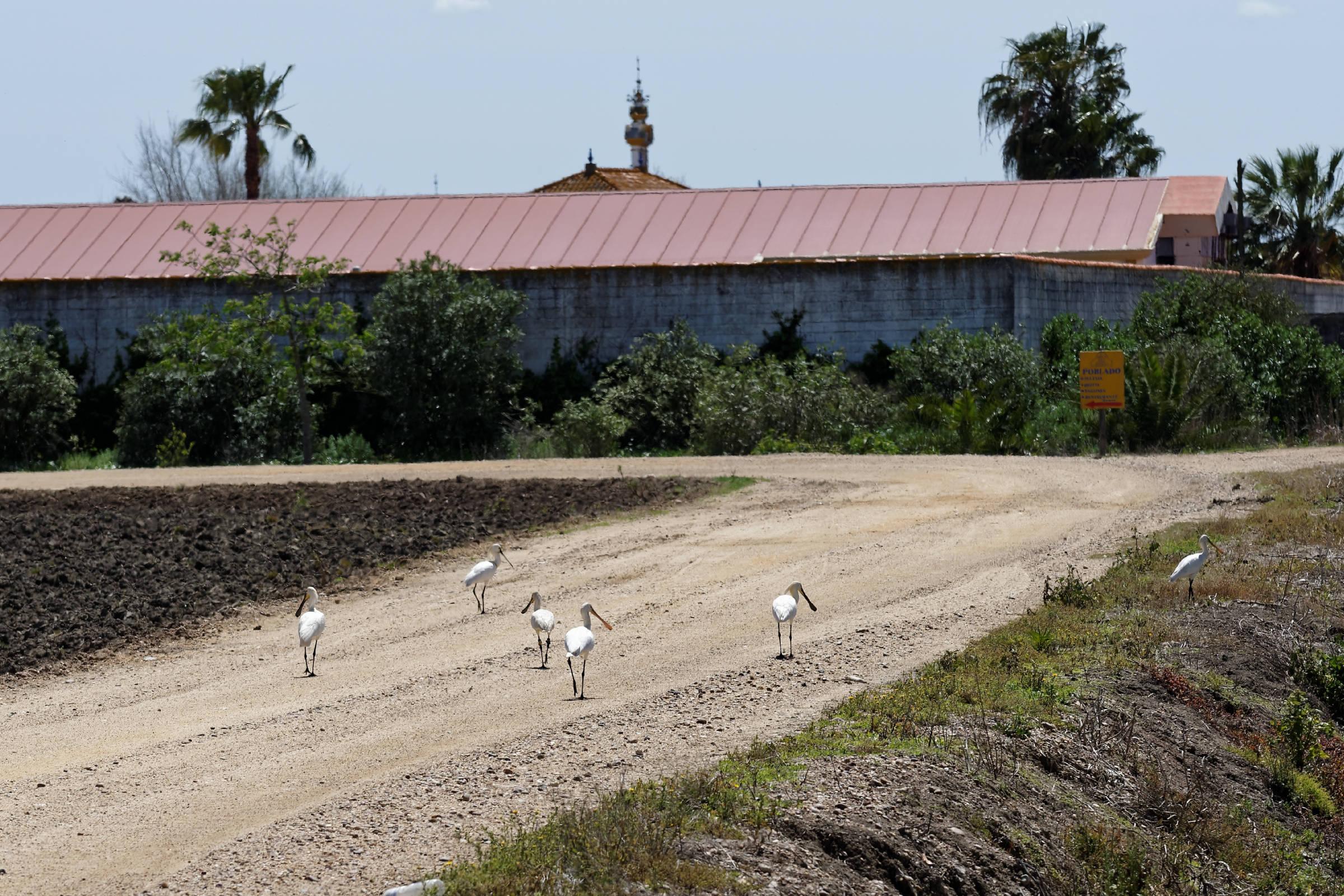 160414-Isla minima - Escobar (Andalousie) (32)