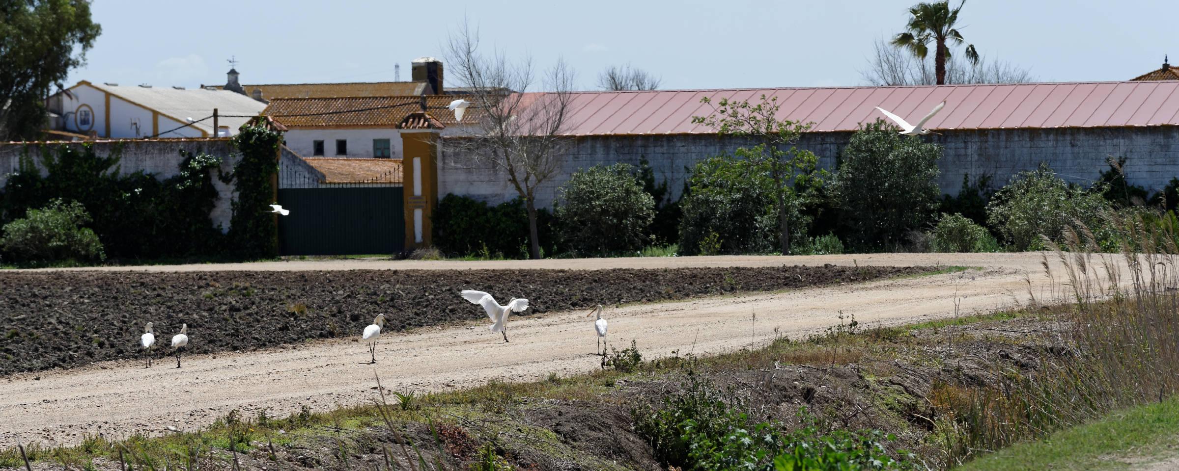 160414-Isla minima - Escobar (Andalousie) (33)