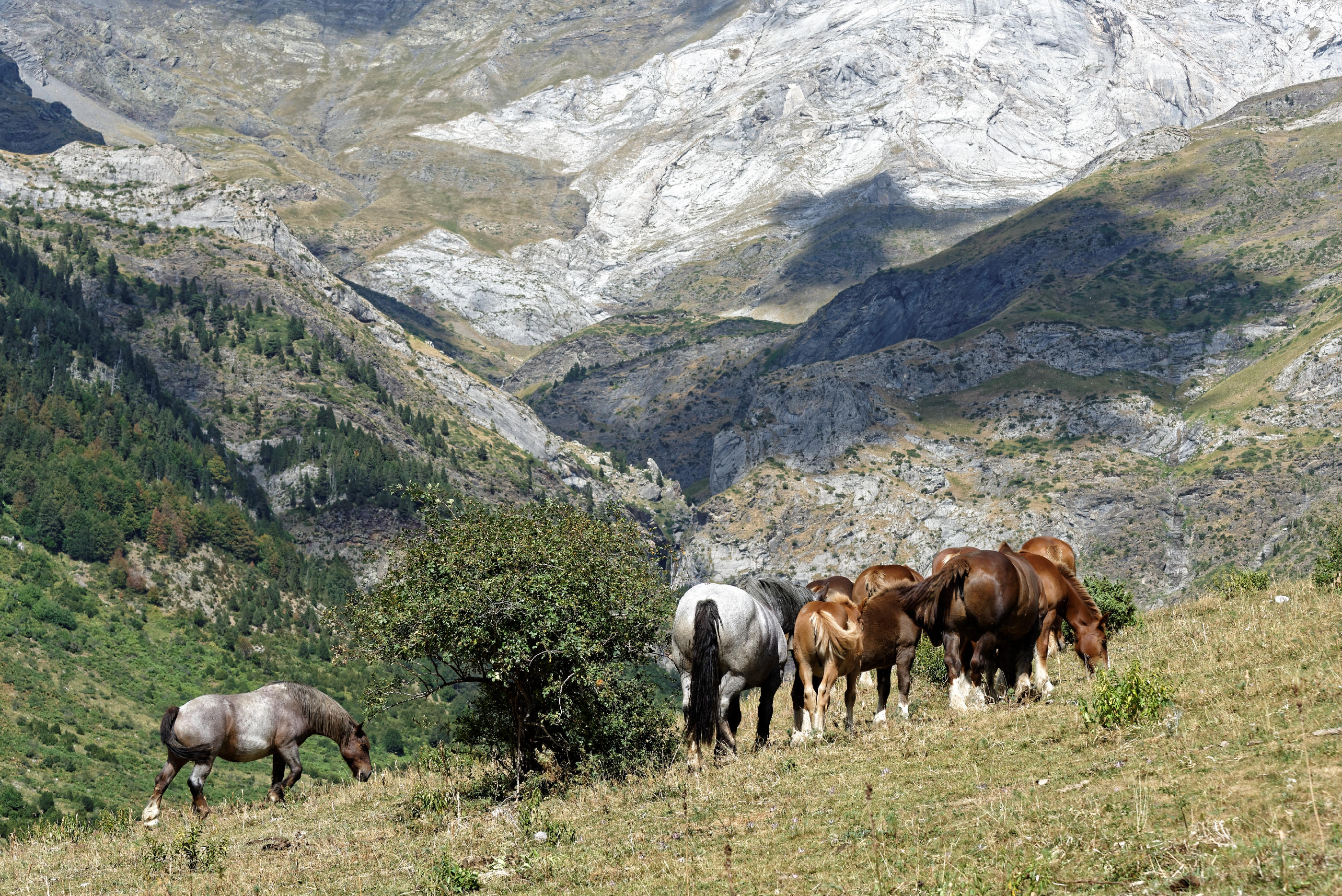 160910-marche-cascade-du-cinca-et-de-la-larri-sobrarbe-aragon-165