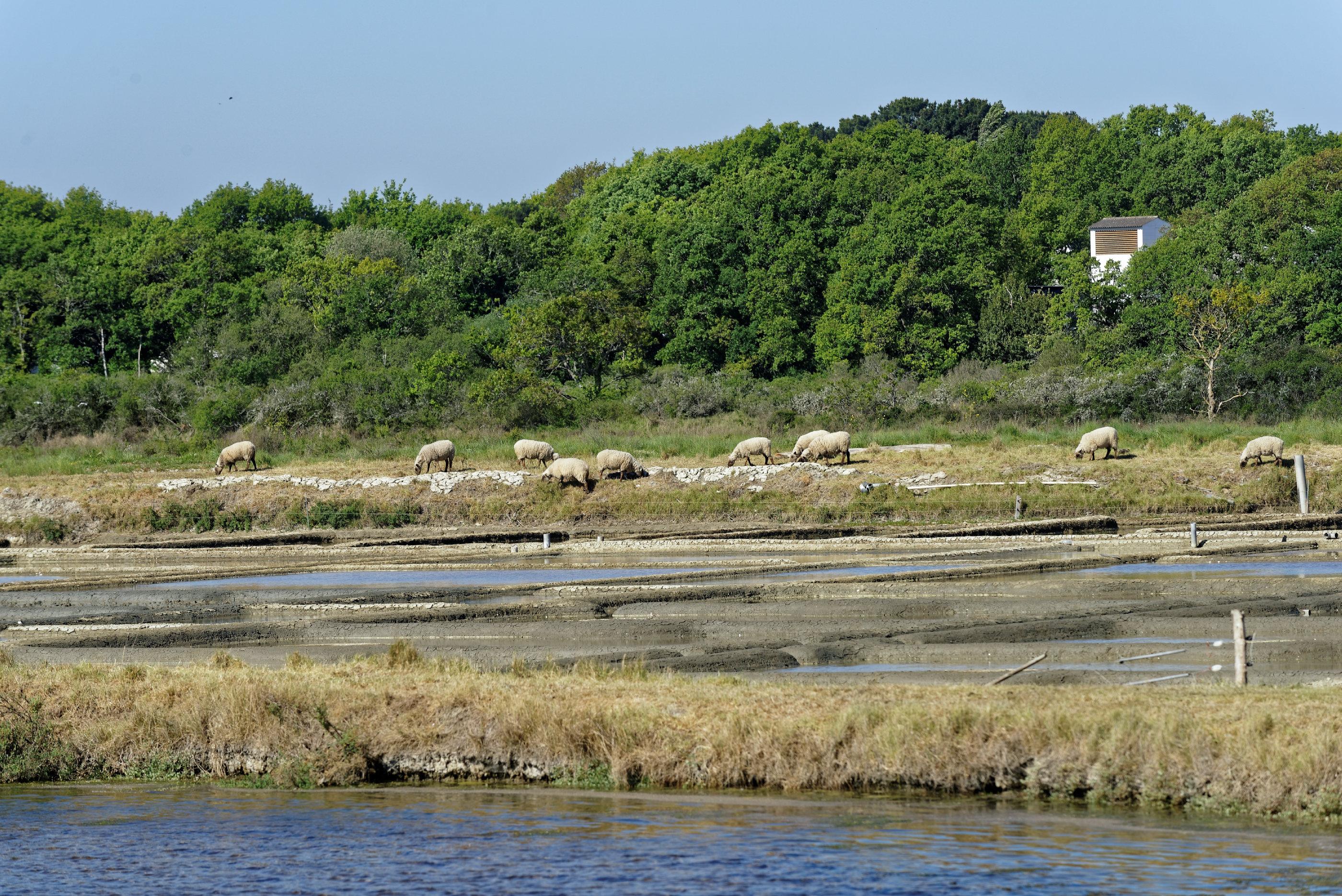 170429-Mesquer (Loire atlantique) (4)