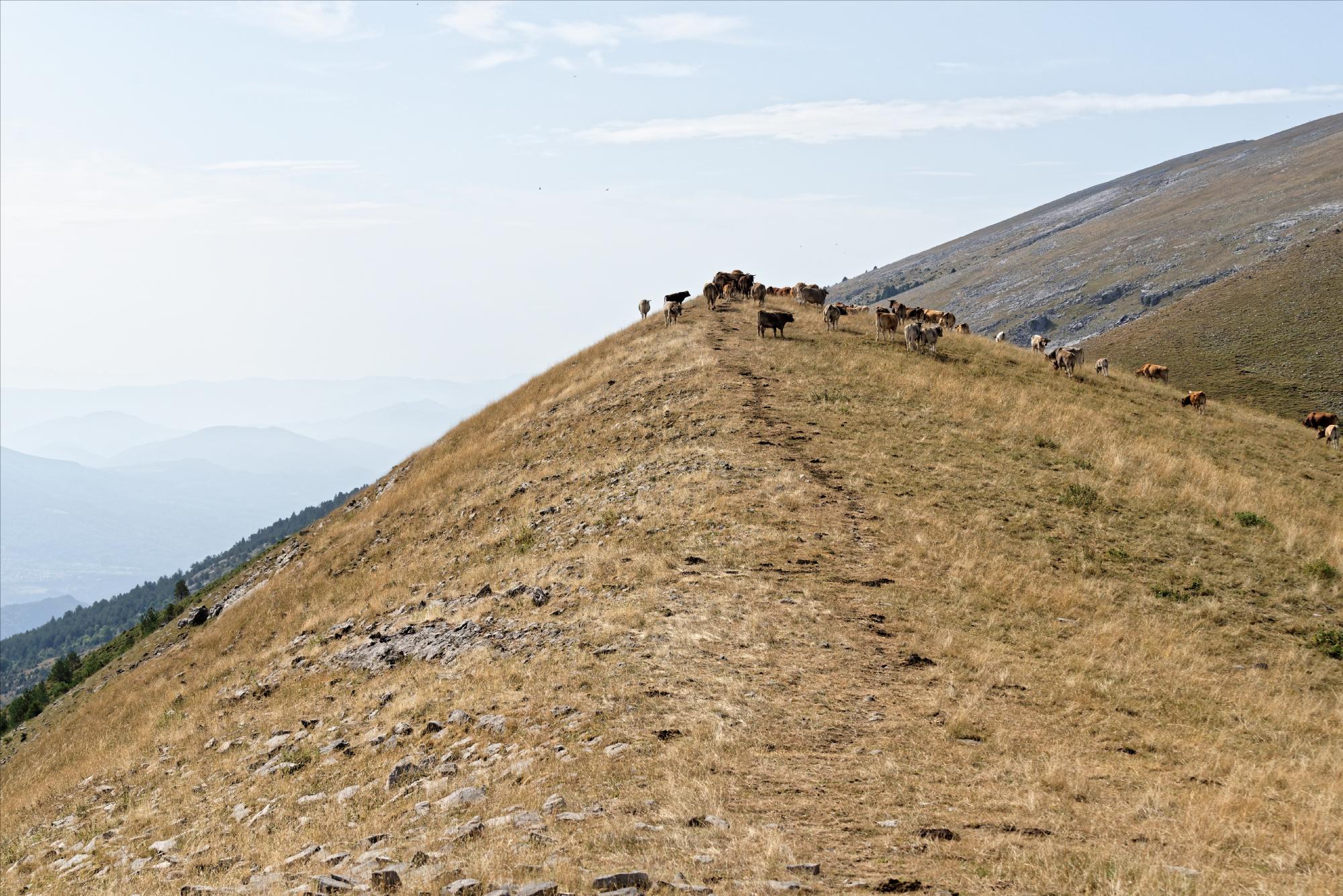 170829 - Montana de Sensa - Los Sestrales (Sobrarbe) (149)