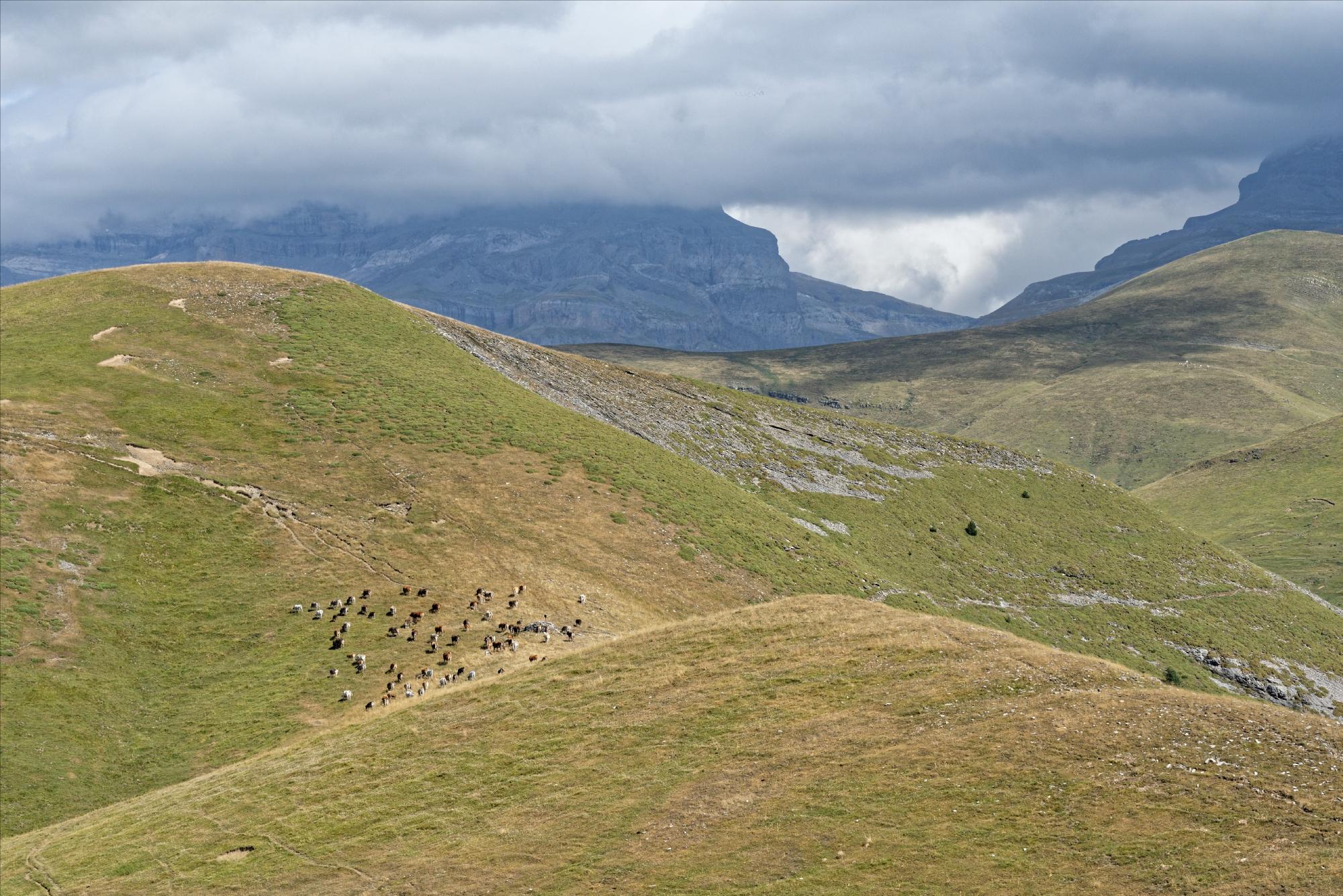 170829 - Montana de Sensa - Los Sestrales (Sobrarbe) (173)
