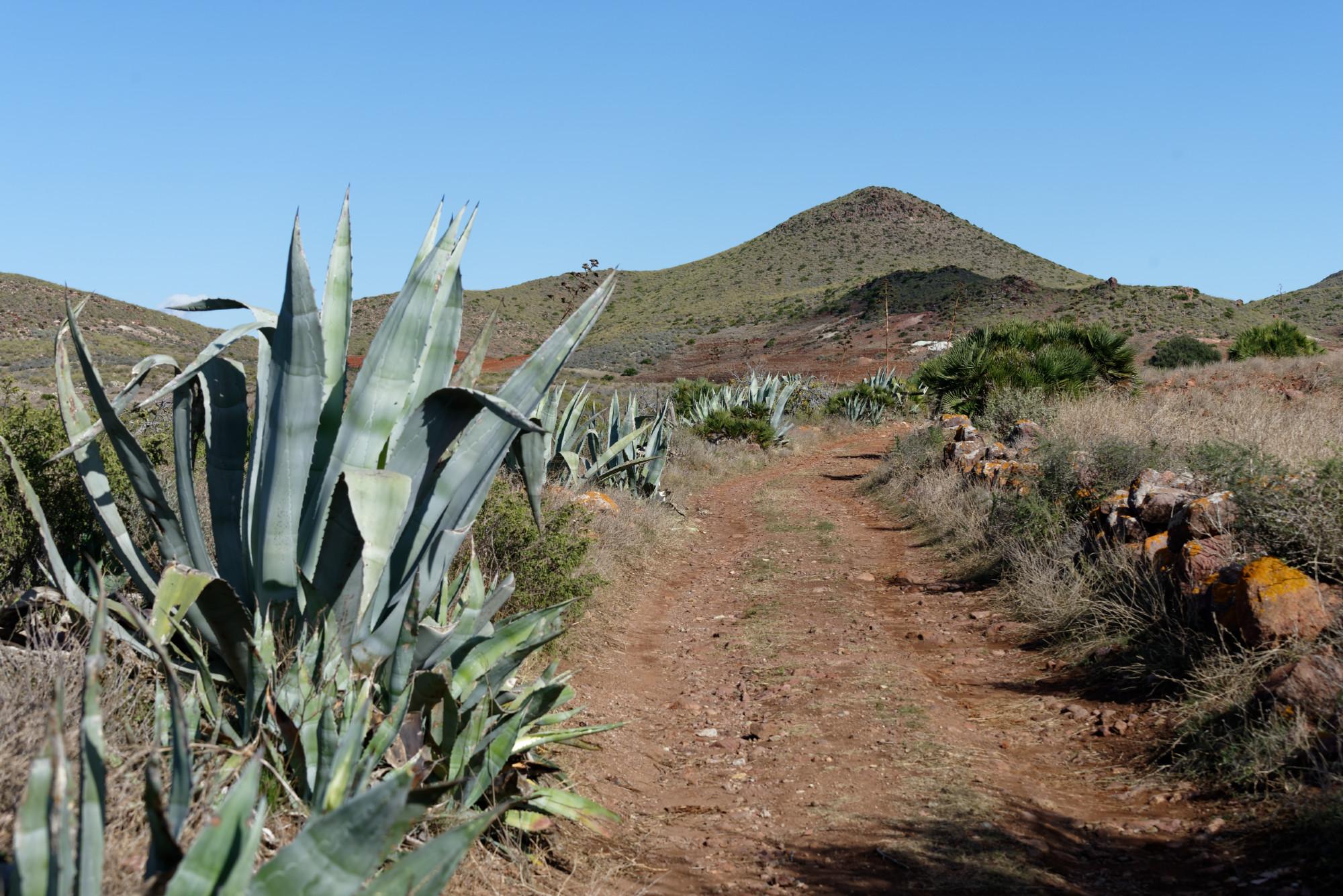 171212-Marche La Boca de los Frailes vers Cerro de Limones (12) (Cabo de Gata-Andalousie)