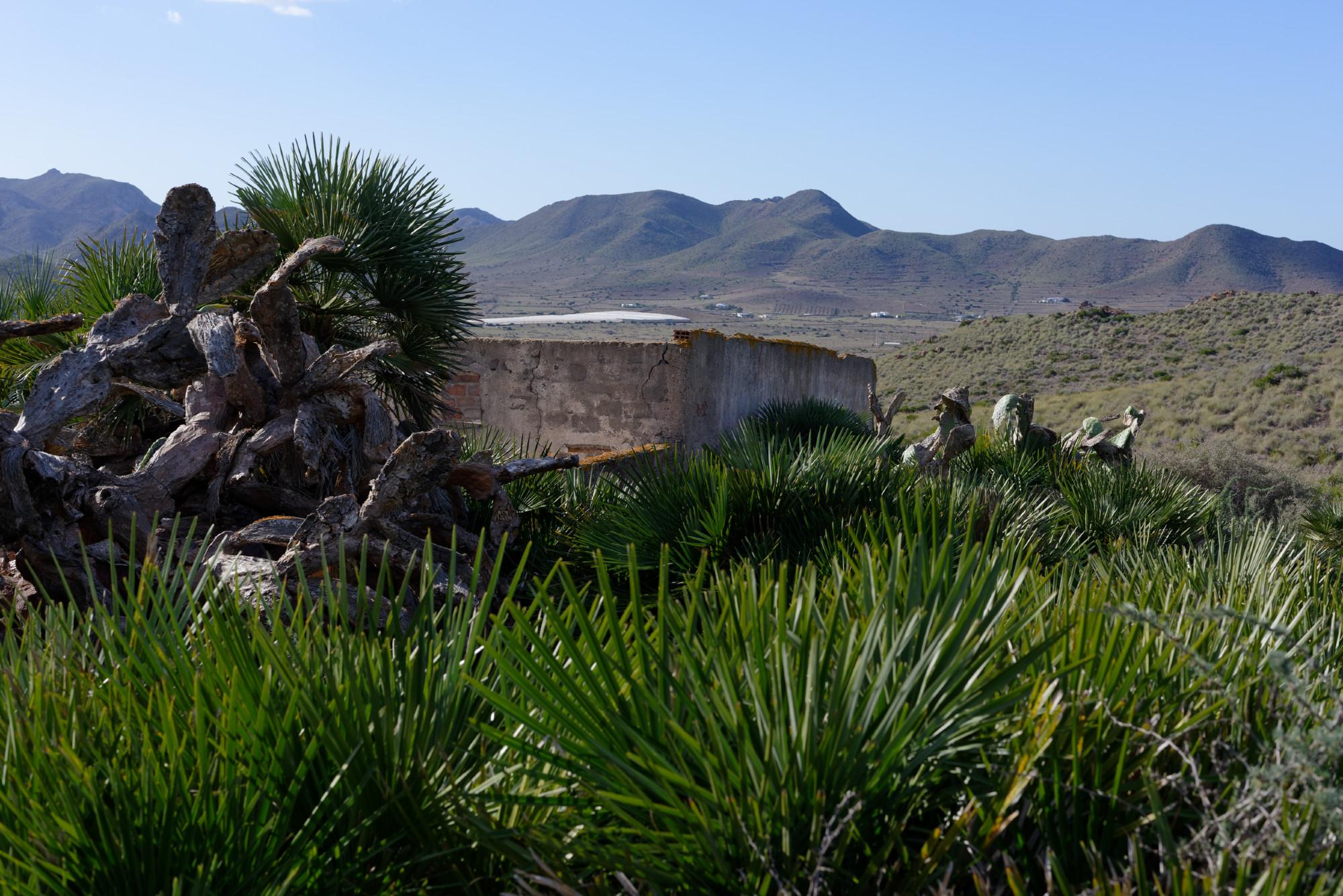 171212-Marche La Boca de los Frailes vers Cerro de Limones (20) (Cabo de Gata-Andalousie)
