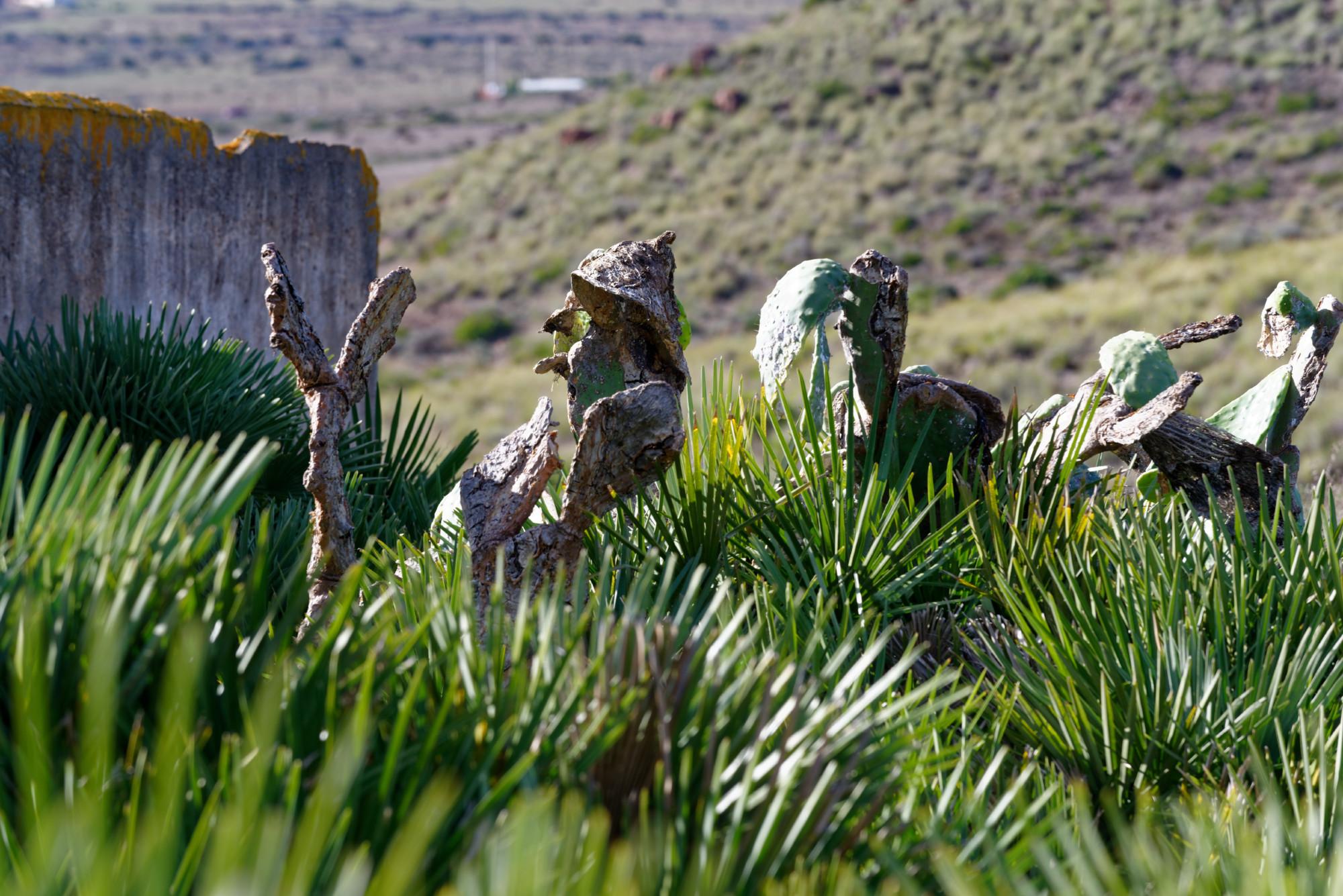 171212-Marche La Boca de los Frailes vers Cerro de Limones (21) (Cabo de Gata-Andalousie)
