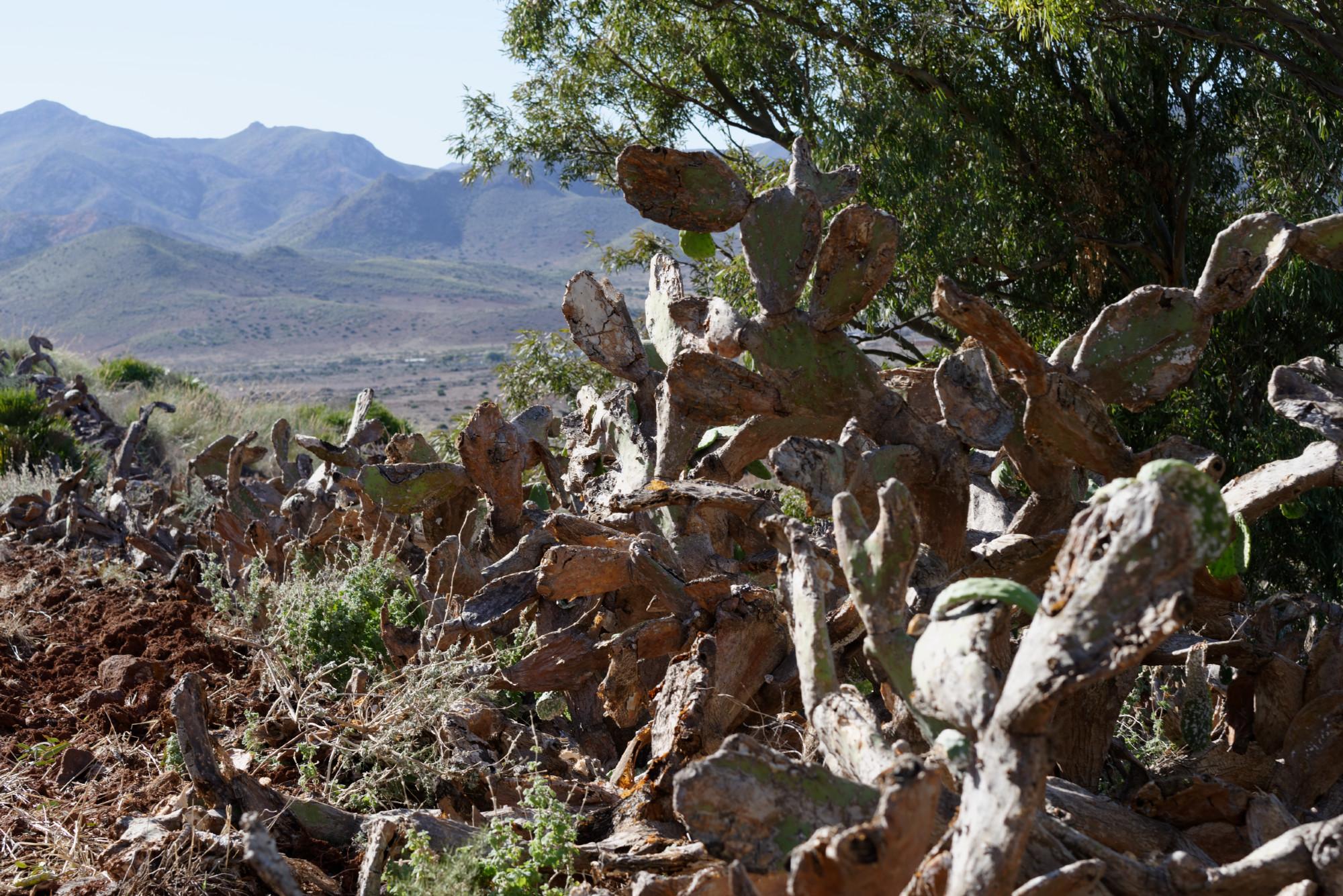 171212-Marche La Boca de los Frailes vers Cerro de Limones (27) (Cabo de Gata-Andalousie)