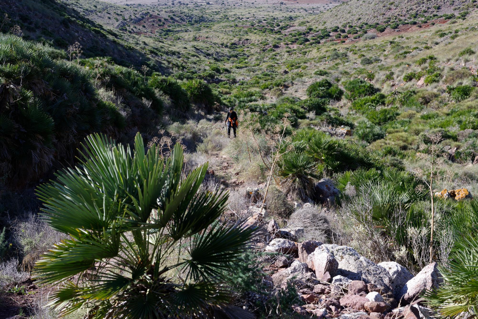 171212-Marche La Boca de los Frailes vers Cerro de Limones (37) (Cabo de Gata-Andalousie)