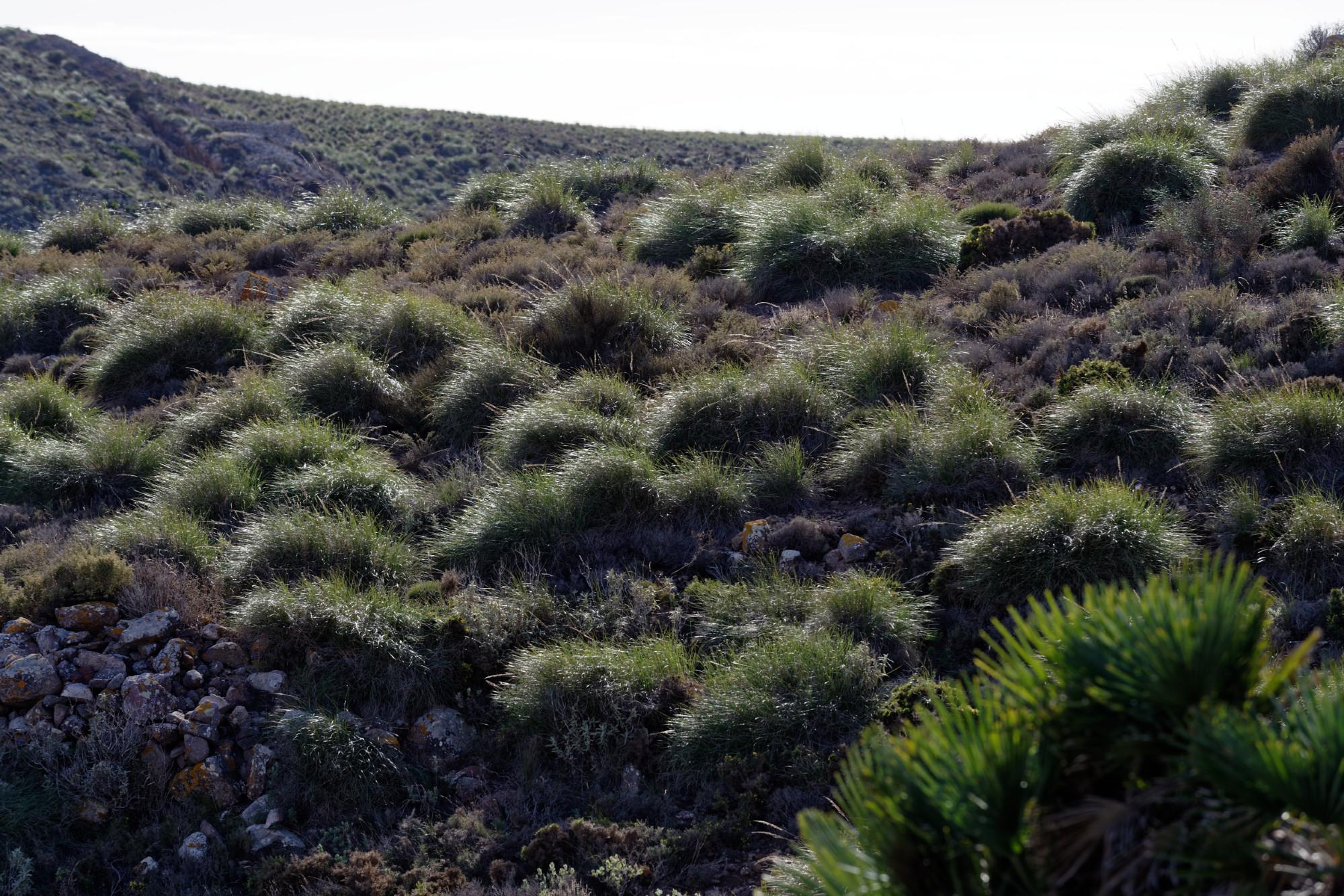 171212-Marche La Boca de los Frailes vers Cerro de Limones (65) (Cabo de Gata-Andalousie)