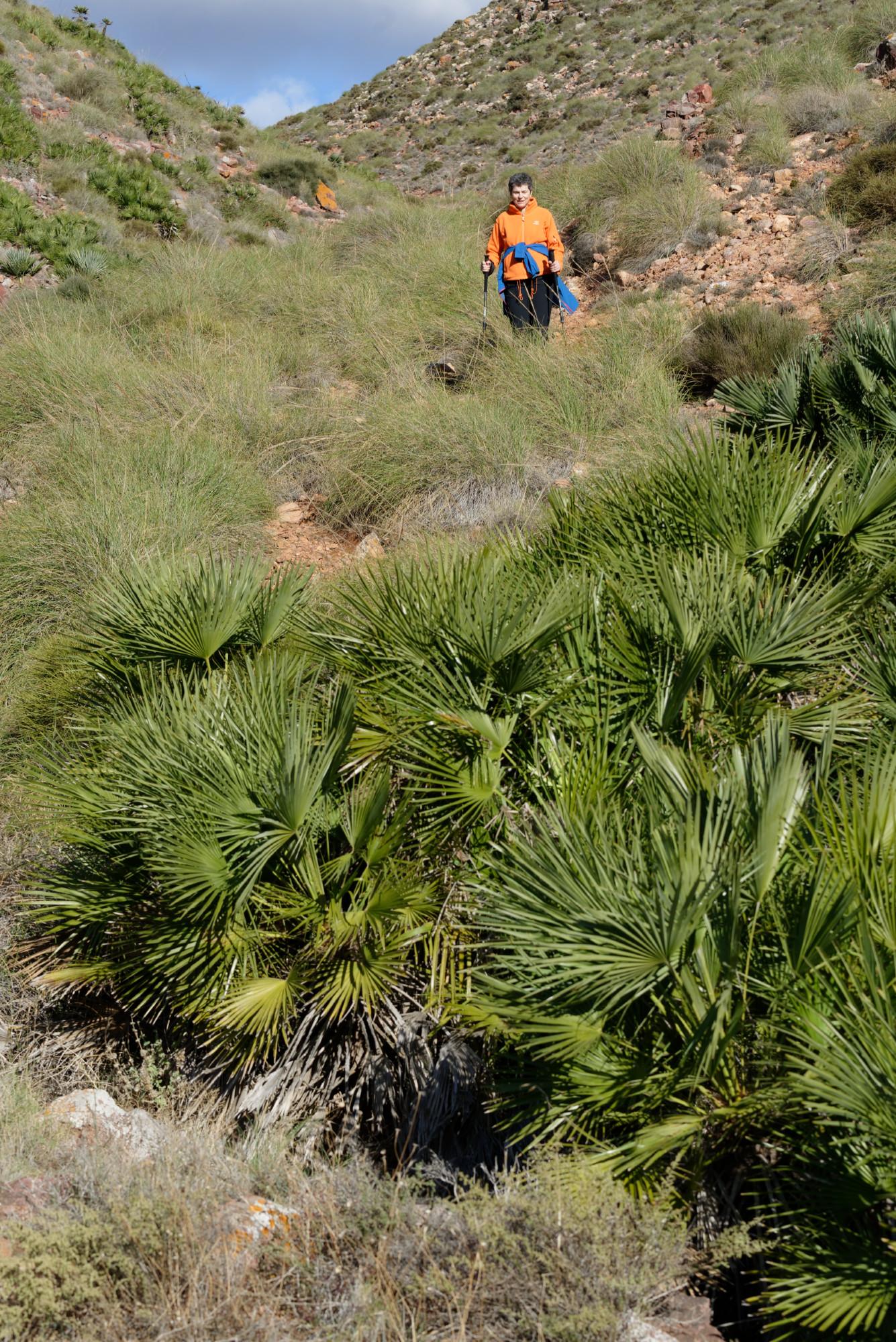 171212-Marche La Boca de los Frailes vers Cerro de Limones (67) (Cabo de Gata-Andalousie)