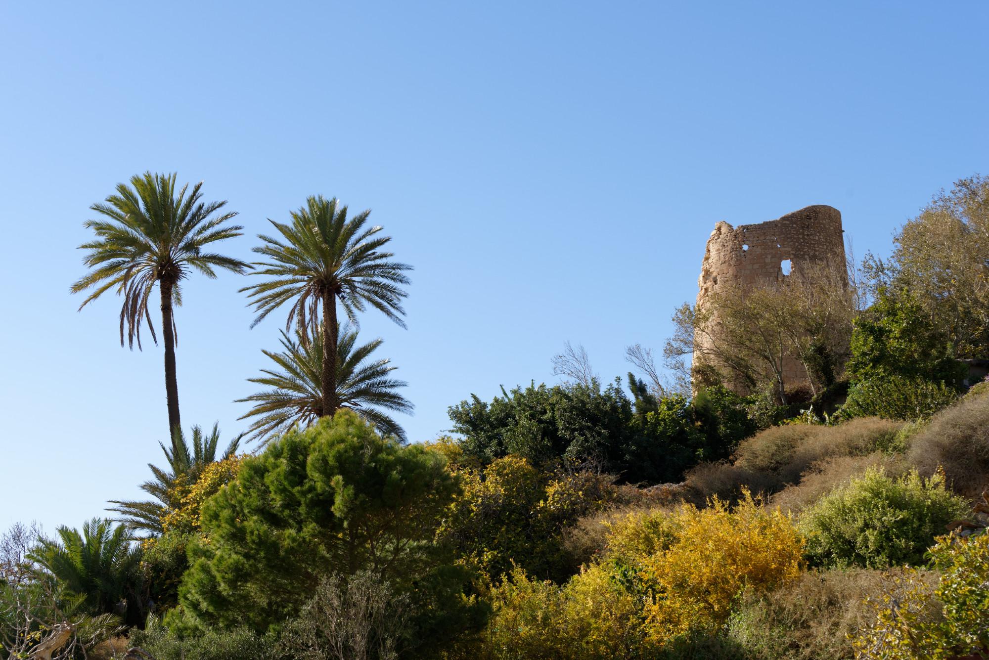 171213-Marche Las Negras-Cala San Pedro-Las Negras (59) (Cabo de Gata-Andalousie)