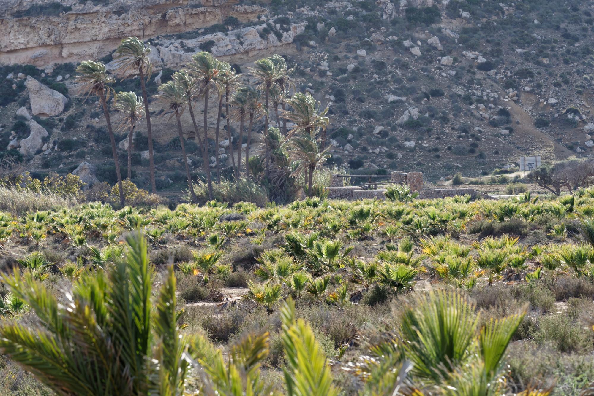 171214-Cala el Playazo (Cabode Gata-Andalousie) (3)