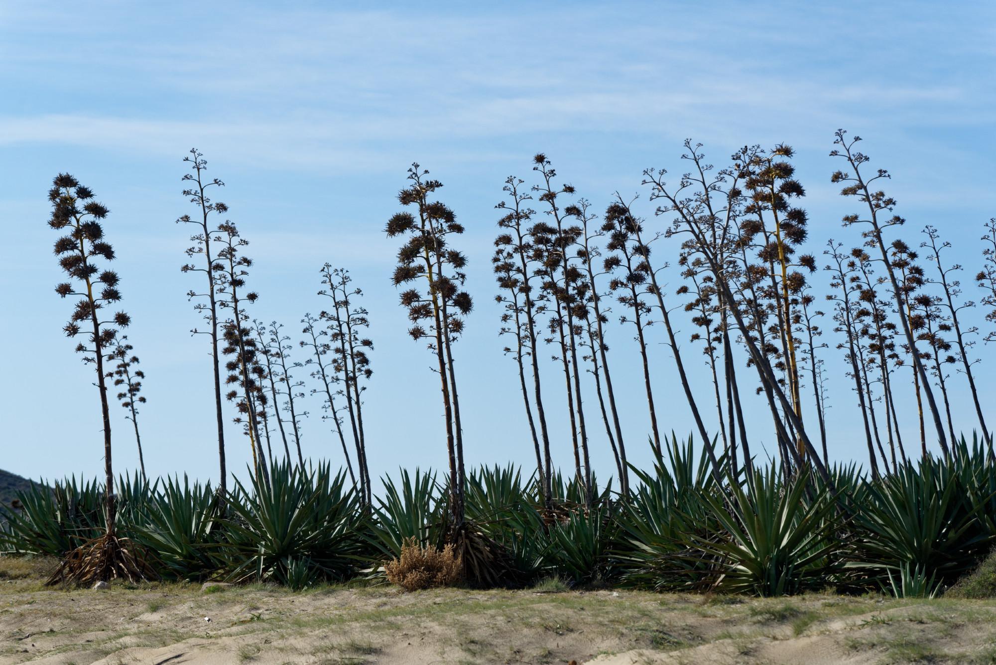 171214-San Jose-Playa de Genoveses (Cabo de Gata-Andalousie) (132)