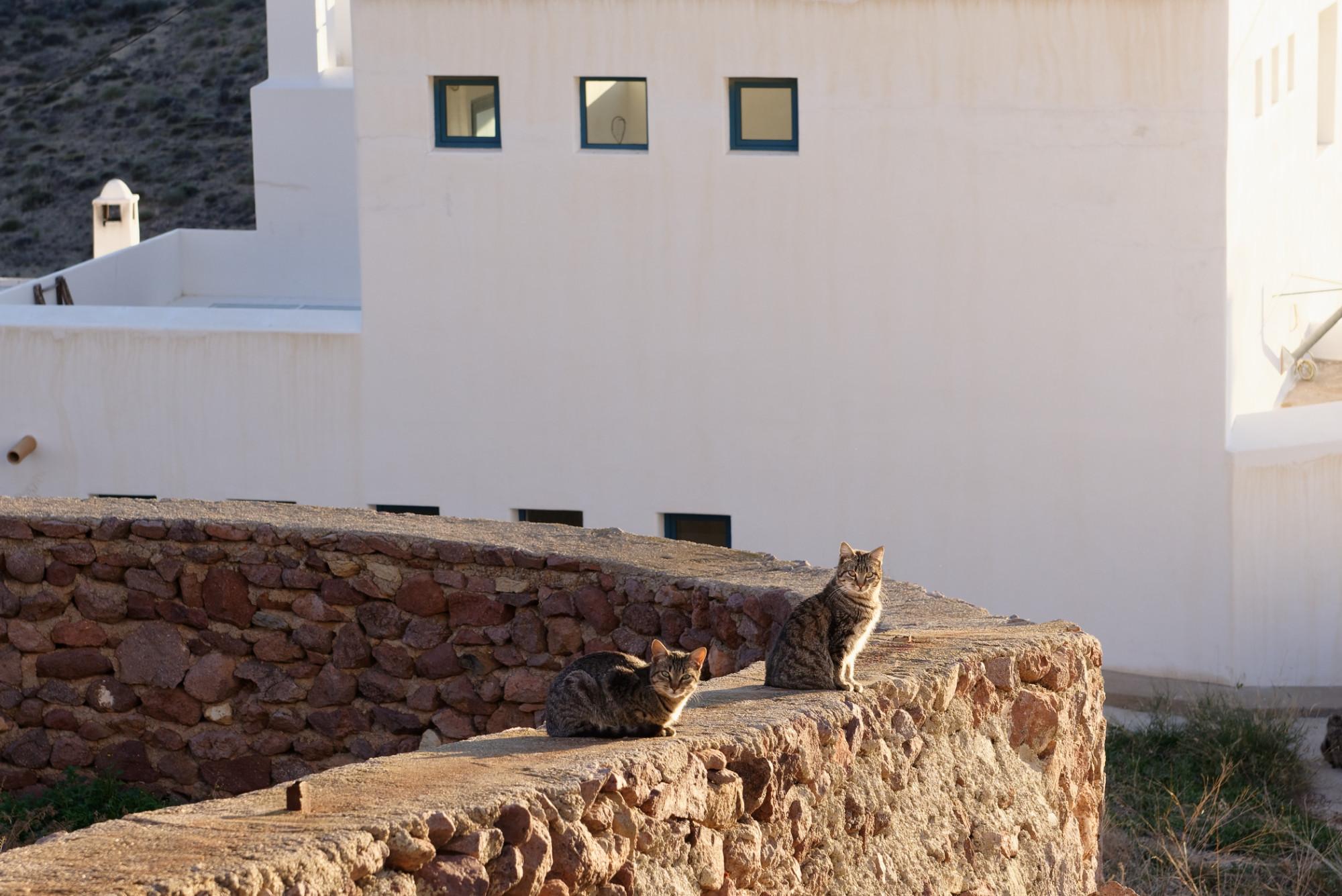 171218-Las Presillas Bajas (Cabo de Gata-Andalousie) (4)