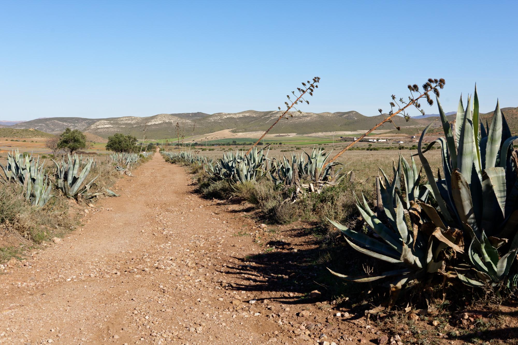 171218-Piste Rodalquilar vers Cortijo del Fraile (Cabo de Gata-Andalousie) (33)