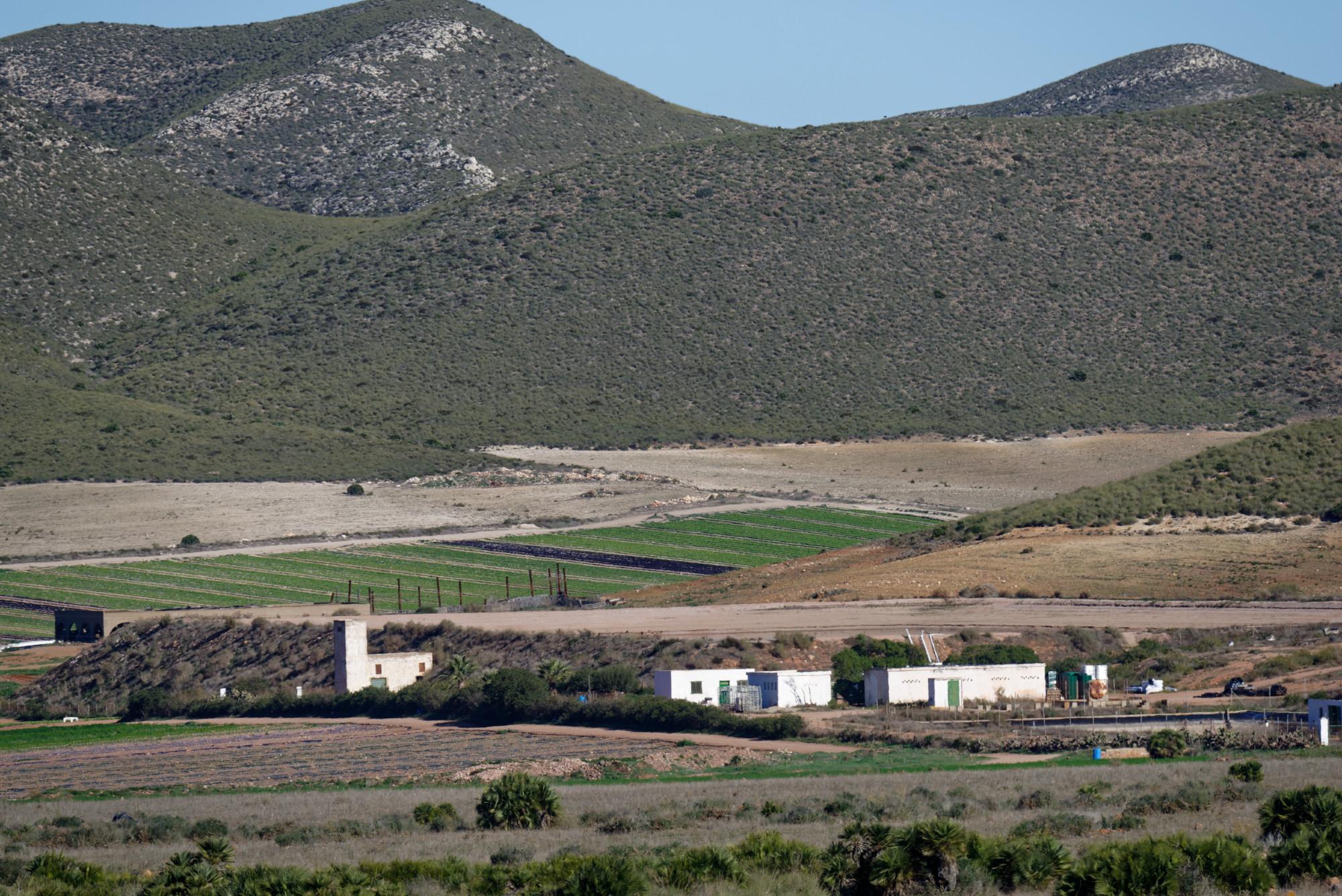 171218-Piste Rodalquilar vers Cortijo del Fraile (Cabo de Gata-Andalousie) (37)