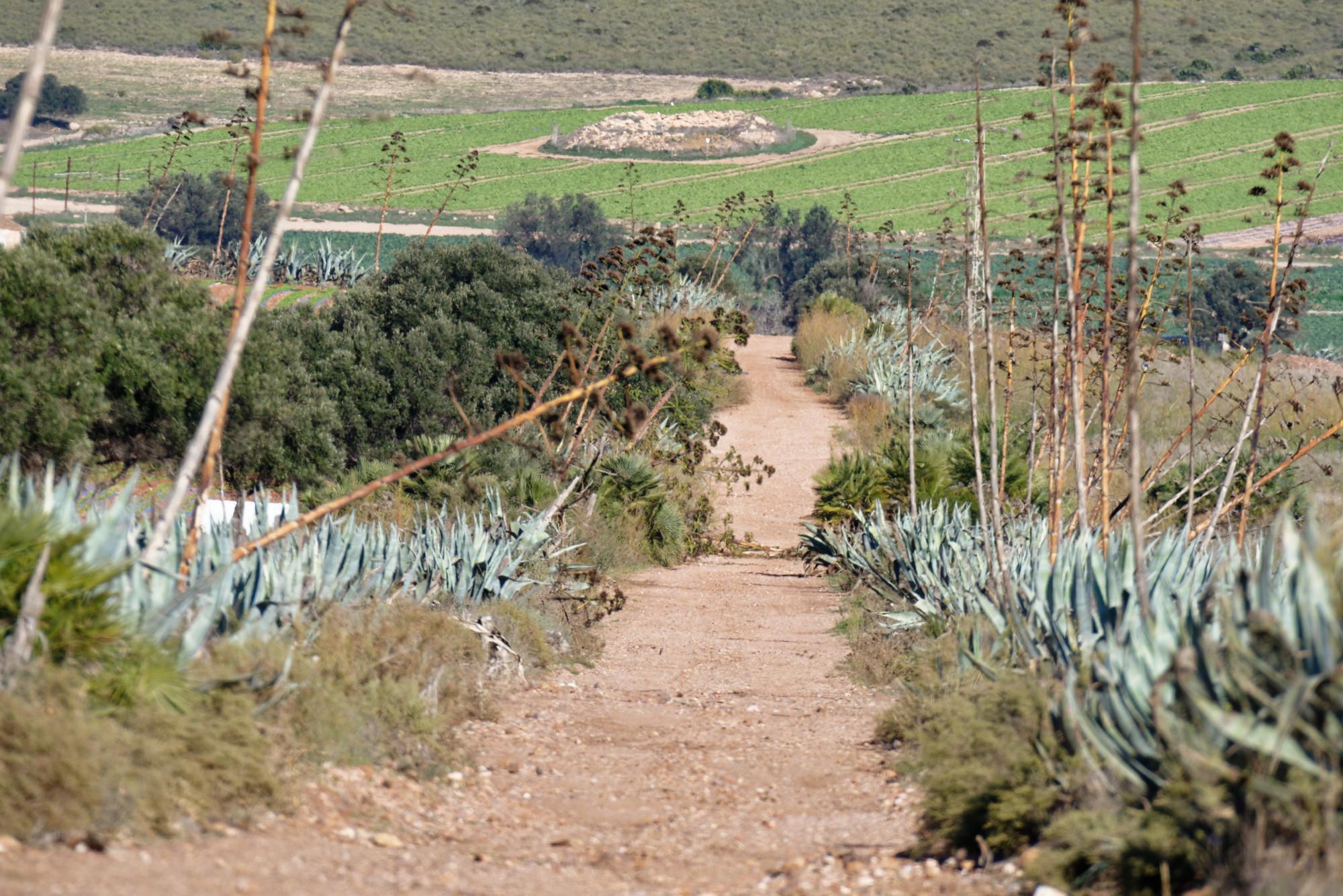 171218-Piste Rodalquilar vers Cortijo del Fraile (Cabo de Gata-Andalousie) (39)