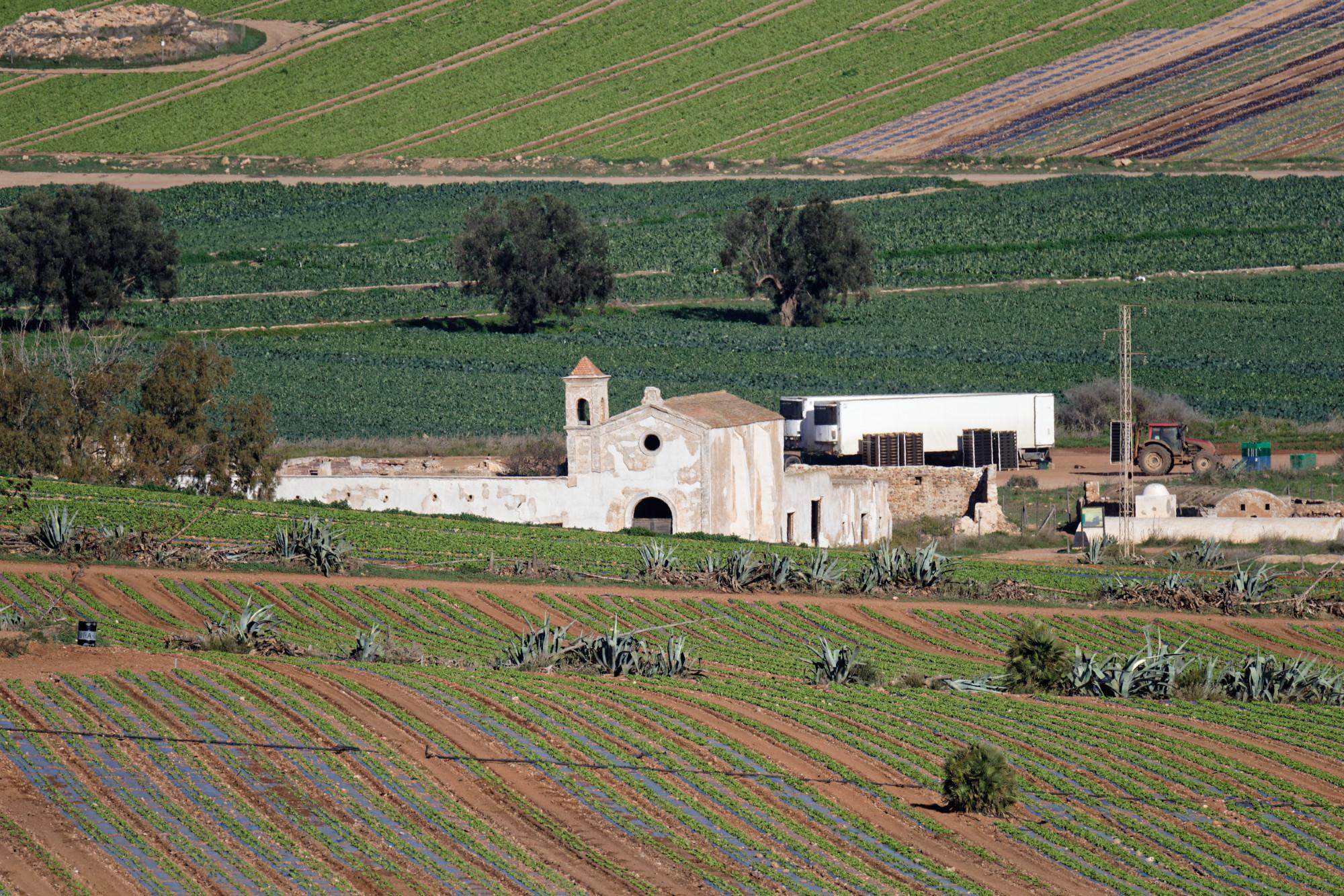 171218-Piste Rodalquilar vers Cortijo del Fraile (Cabo de Gata-Andalousie) (56)