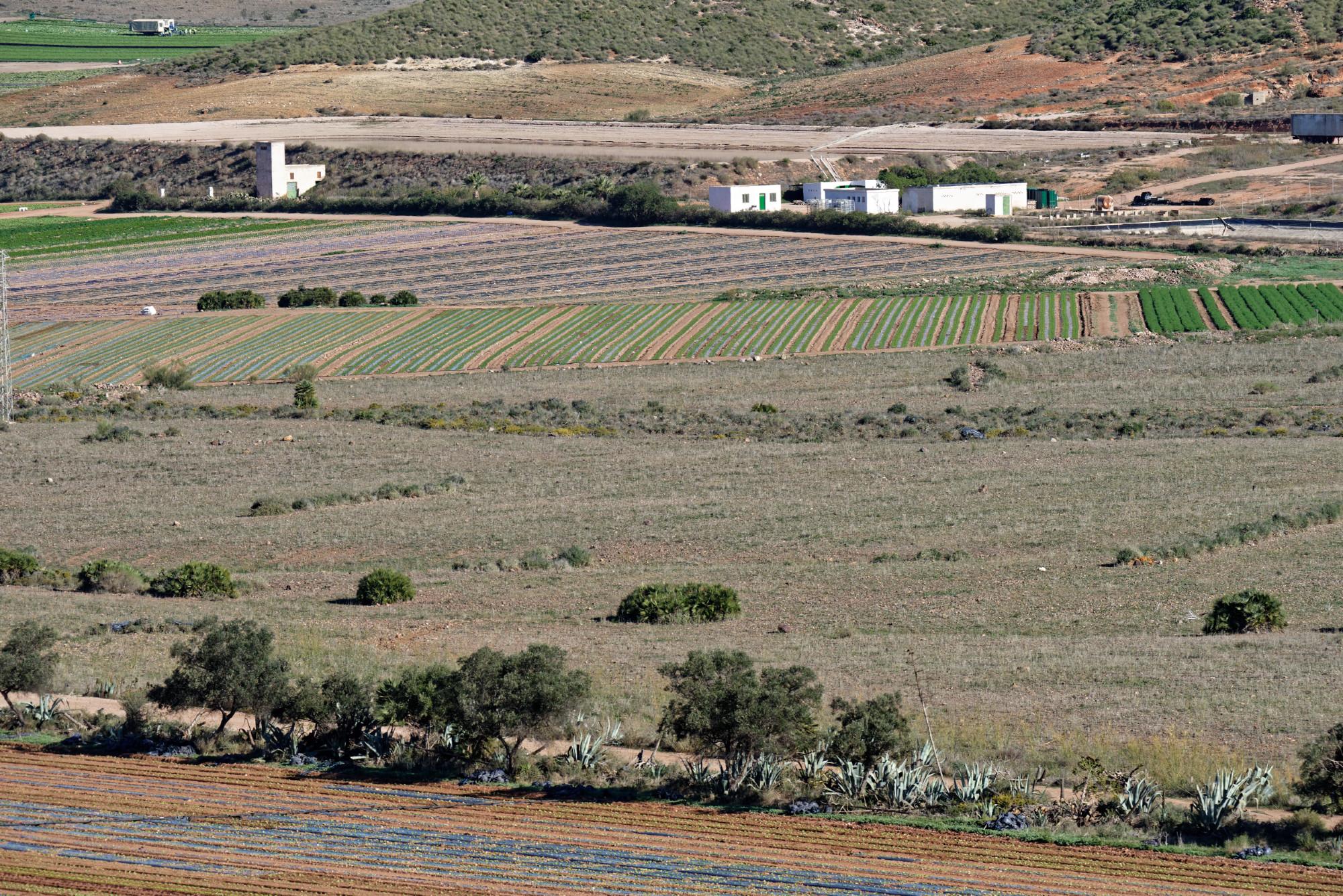 171218-Piste Rodalquilar vers Cortijo del Fraile (Cabo de Gata-Andalousie) (58)