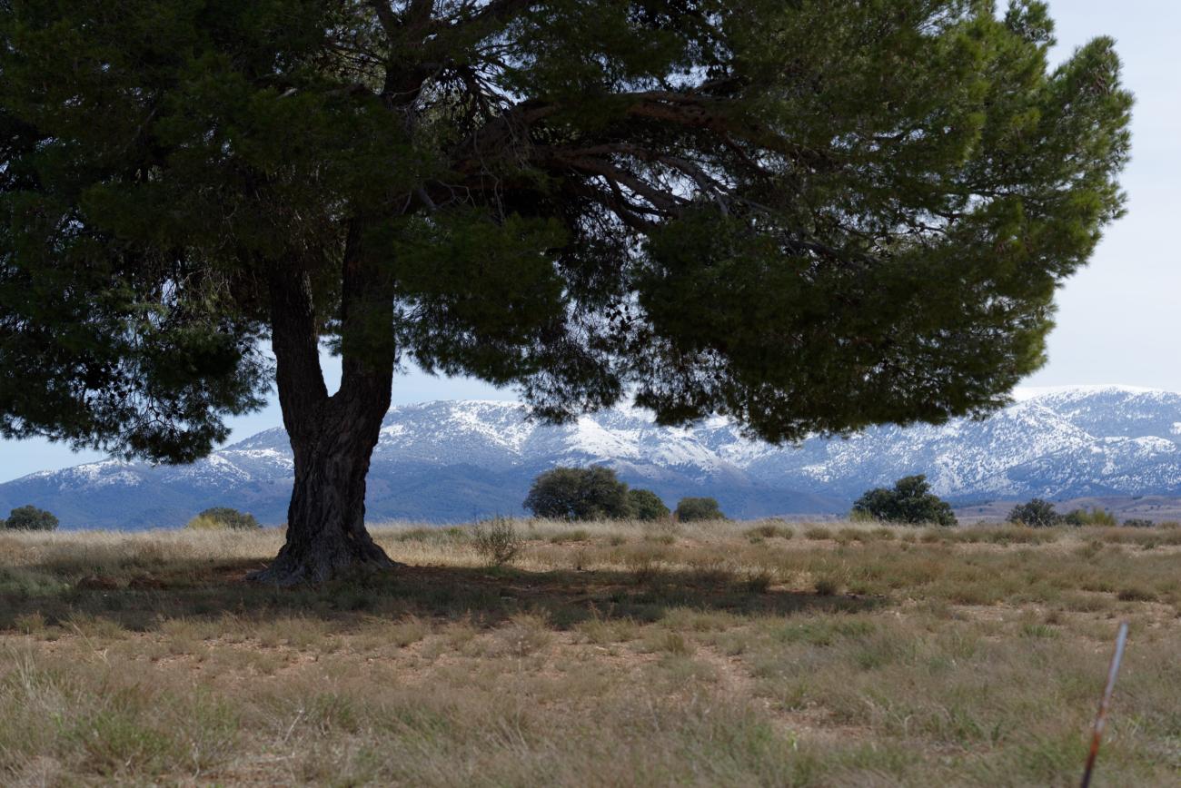 180307-3-Gorafe (Andalousie) (124)