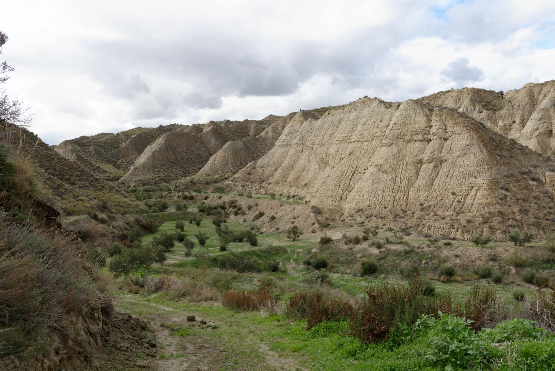 180308-3-Olivar (Andalousie) (15)