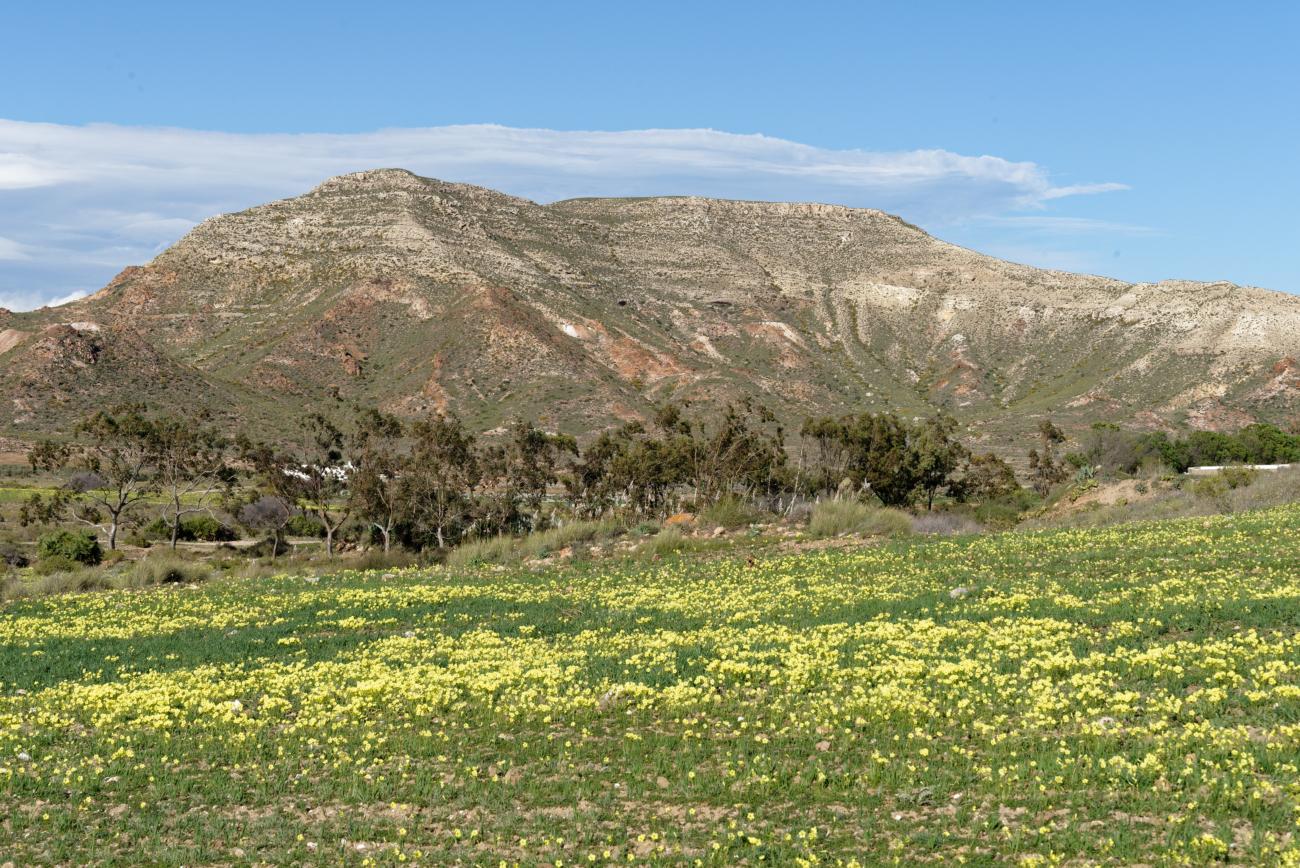 180310-2-Cala del Carnaje (Cabo de Gata - Andalousie) (20)
