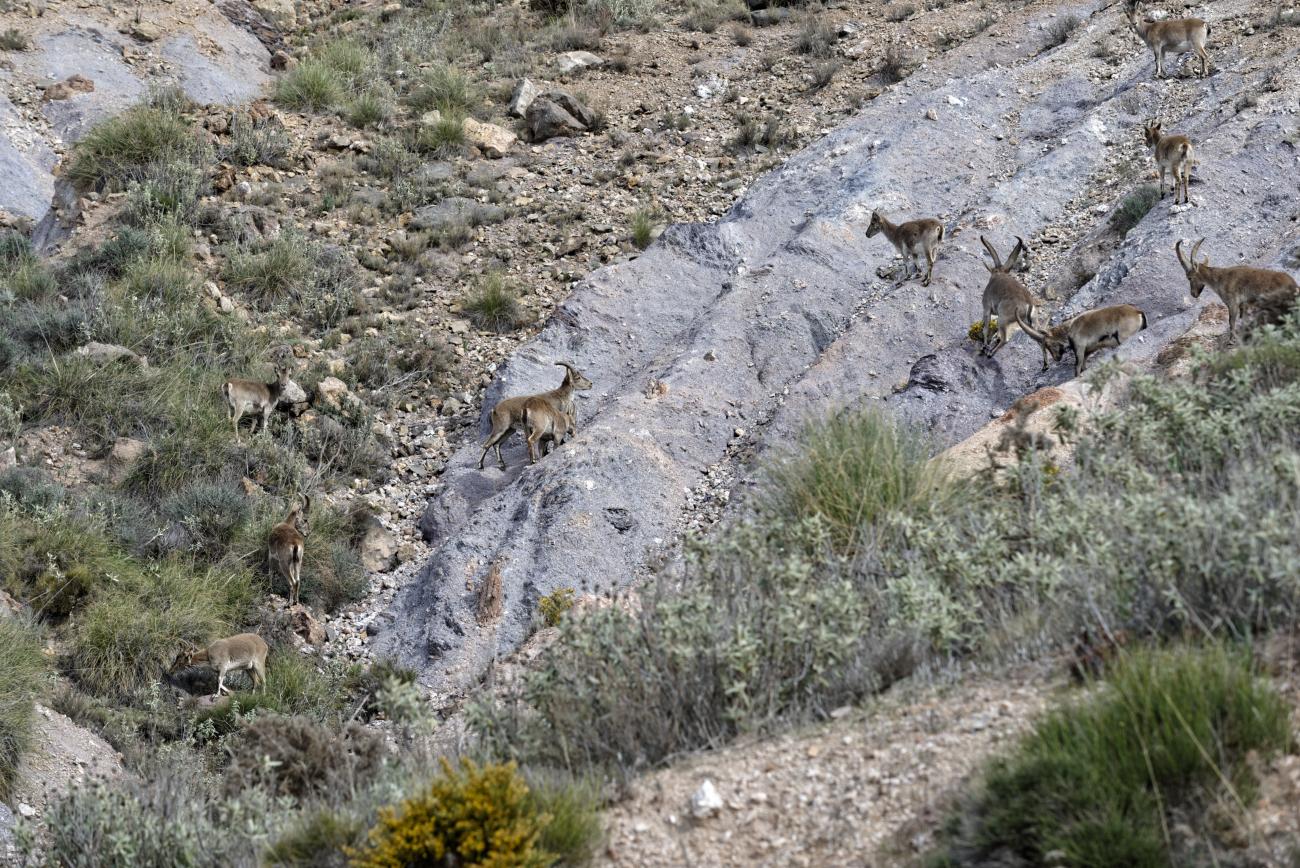180314-3-Sierra Alhamilla (Sierra Alhamilla-Andalousie) (13)_1