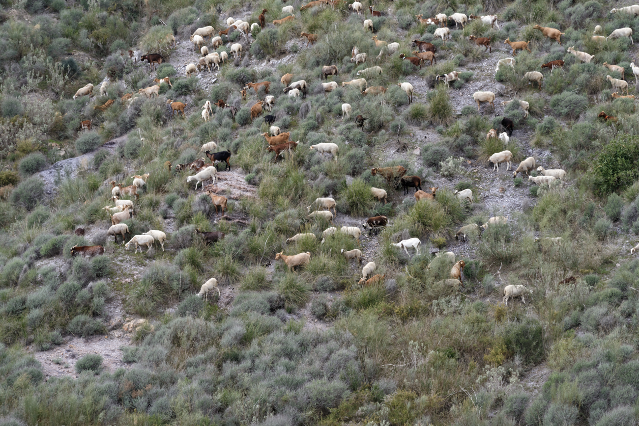 180318-4-Sierra de Cabrera (Sierra de Cabrera - Andalousie) (42)