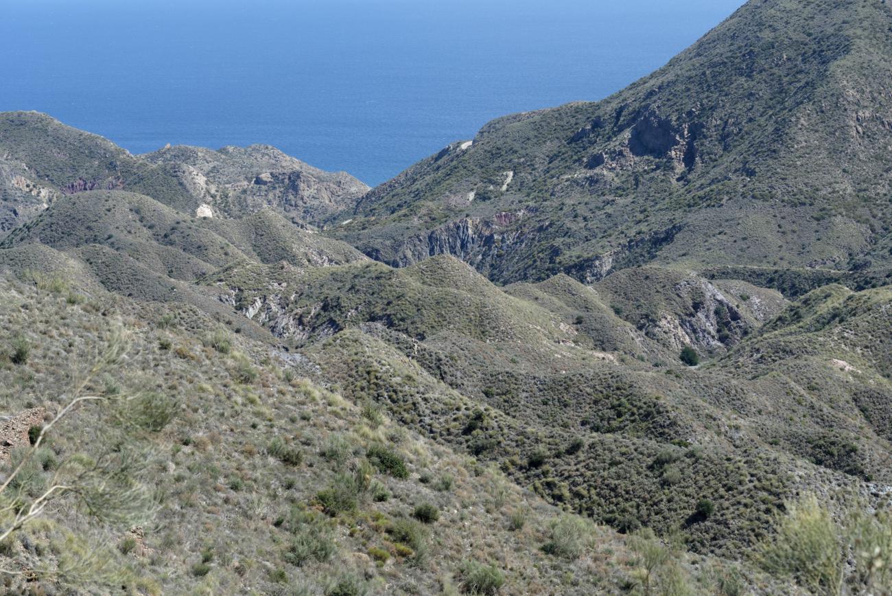 180319-2-Sierra Cabrera (Sierra Cabrera-Andalousie) (56)