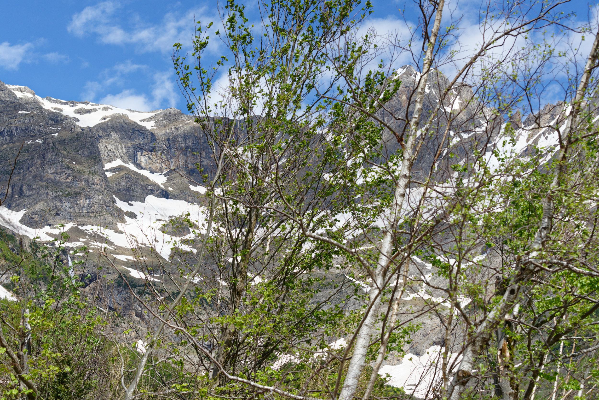 180522-Marche Cascades de la Larri (101) (Valle de Pineta-Sobrarbe-Aragon)