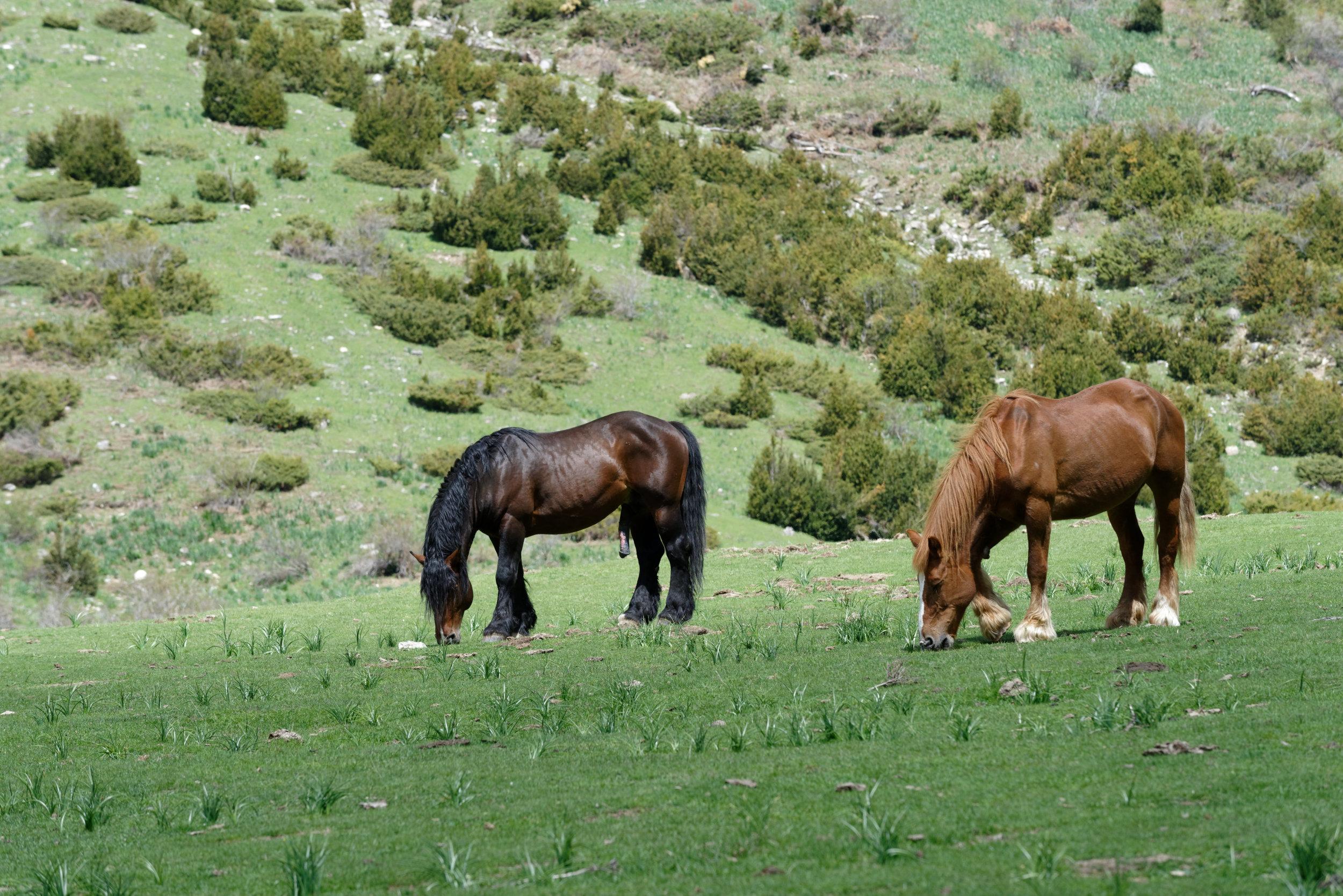 180522-Marche Cascades de la Larri (167) (Valle de Pineta-Sobrarbe-Aragon)
