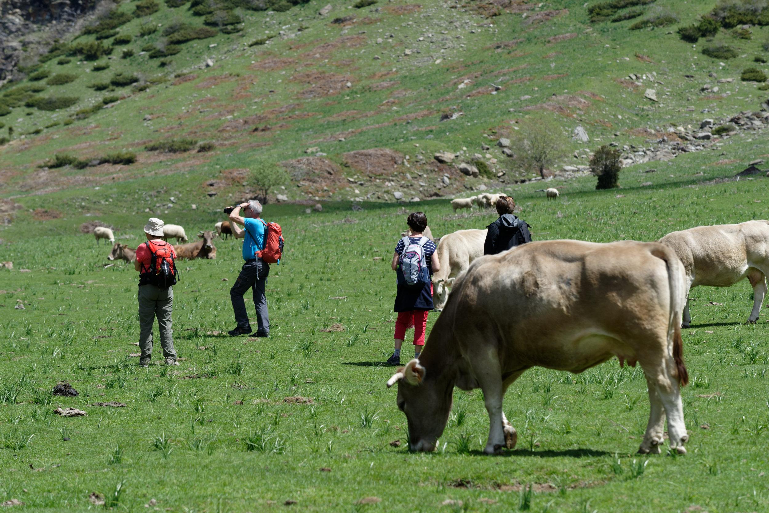 180522-Marche Cascades de la Larri (172) (Valle de Pineta-Sobrarbe-Aragon)