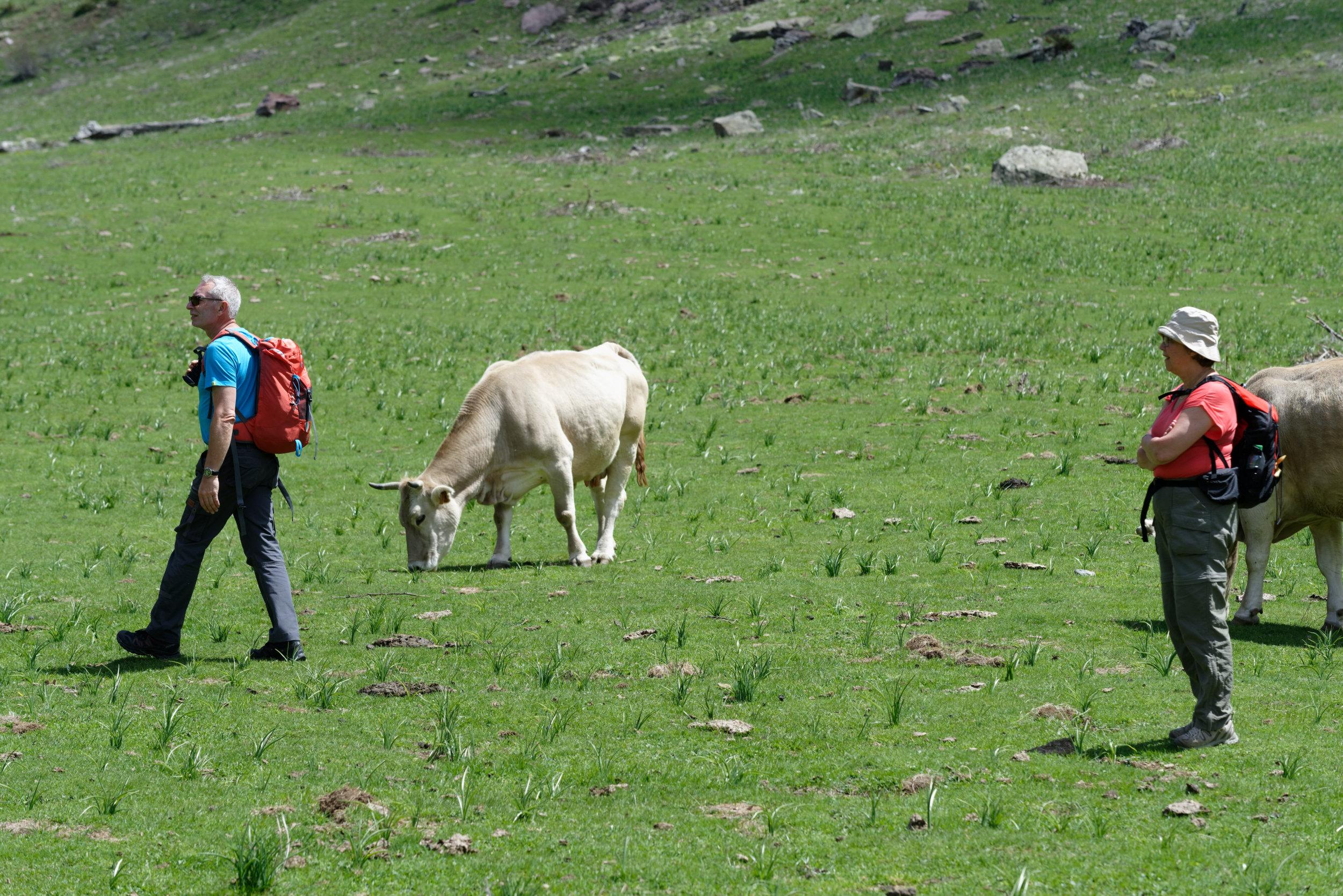 180522-Marche Cascades de la Larri (173) (Valle de Pineta-Sobrarbe-Aragon)