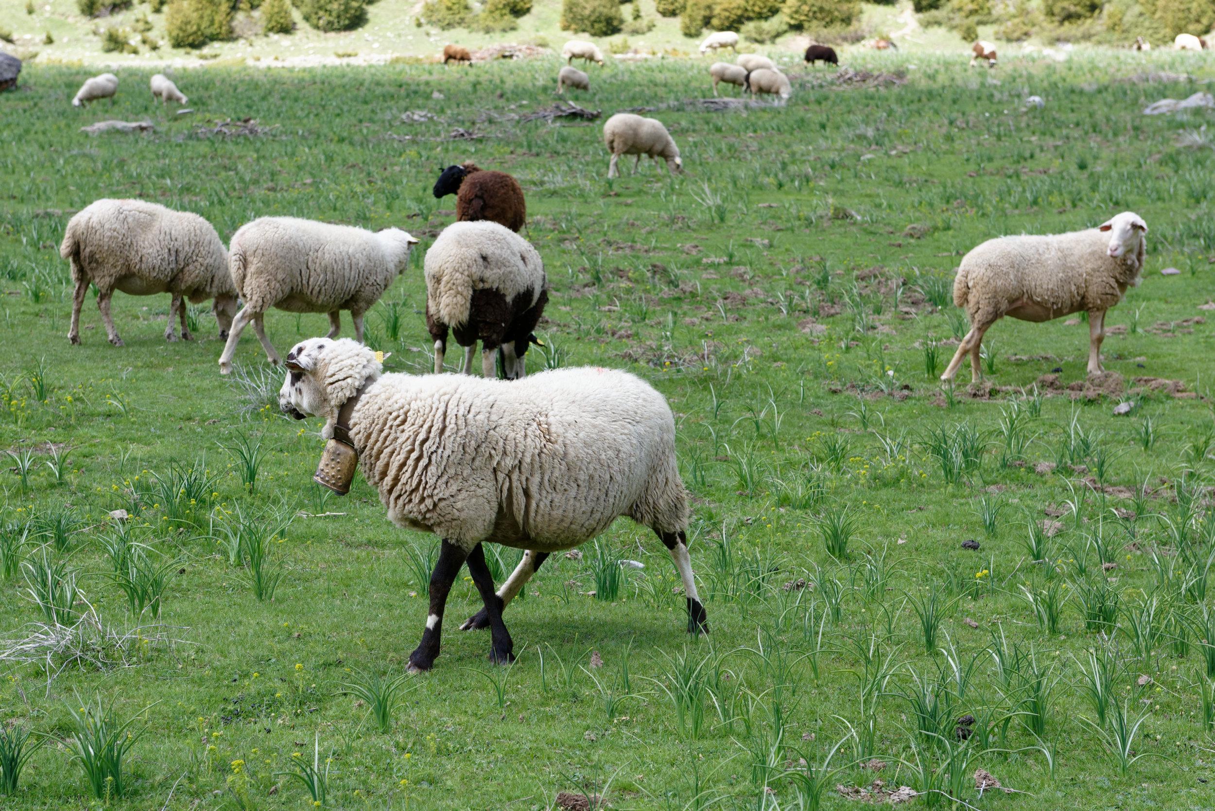 180522-Marche Cascades de la Larri (212) (Valle de Pineta-Sobrarbe-Aragon)