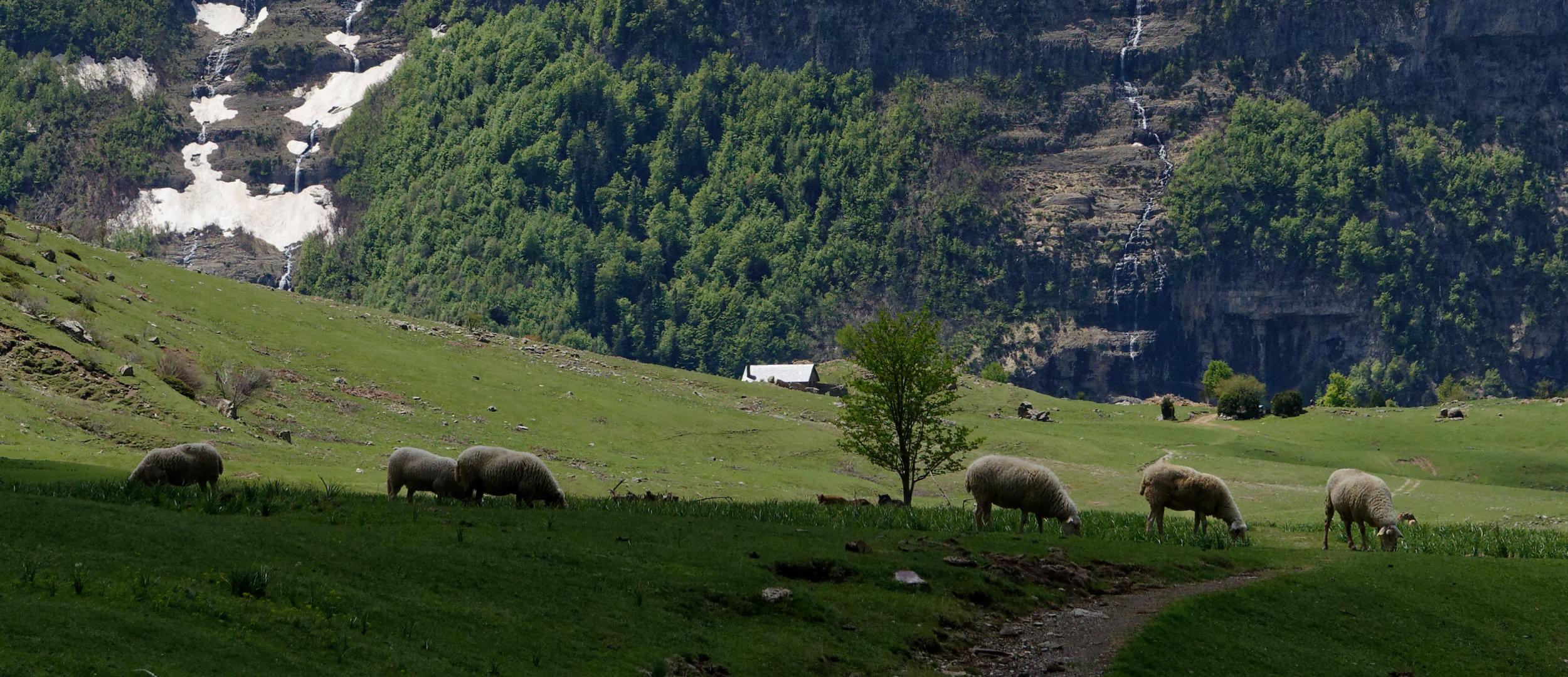 180522-Marche Cascades de la Larri (213) (Valle de Pineta-Sobrarbe-Aragon)_2