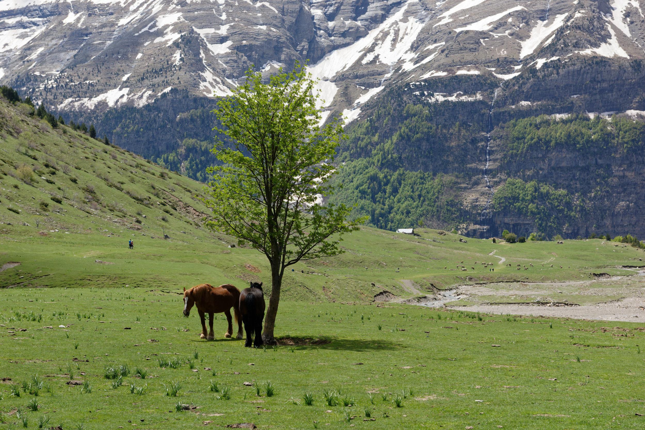 180522-Marche Cascades de la Larri (214) (Valle de Pineta-Sobrarbe-Aragon)