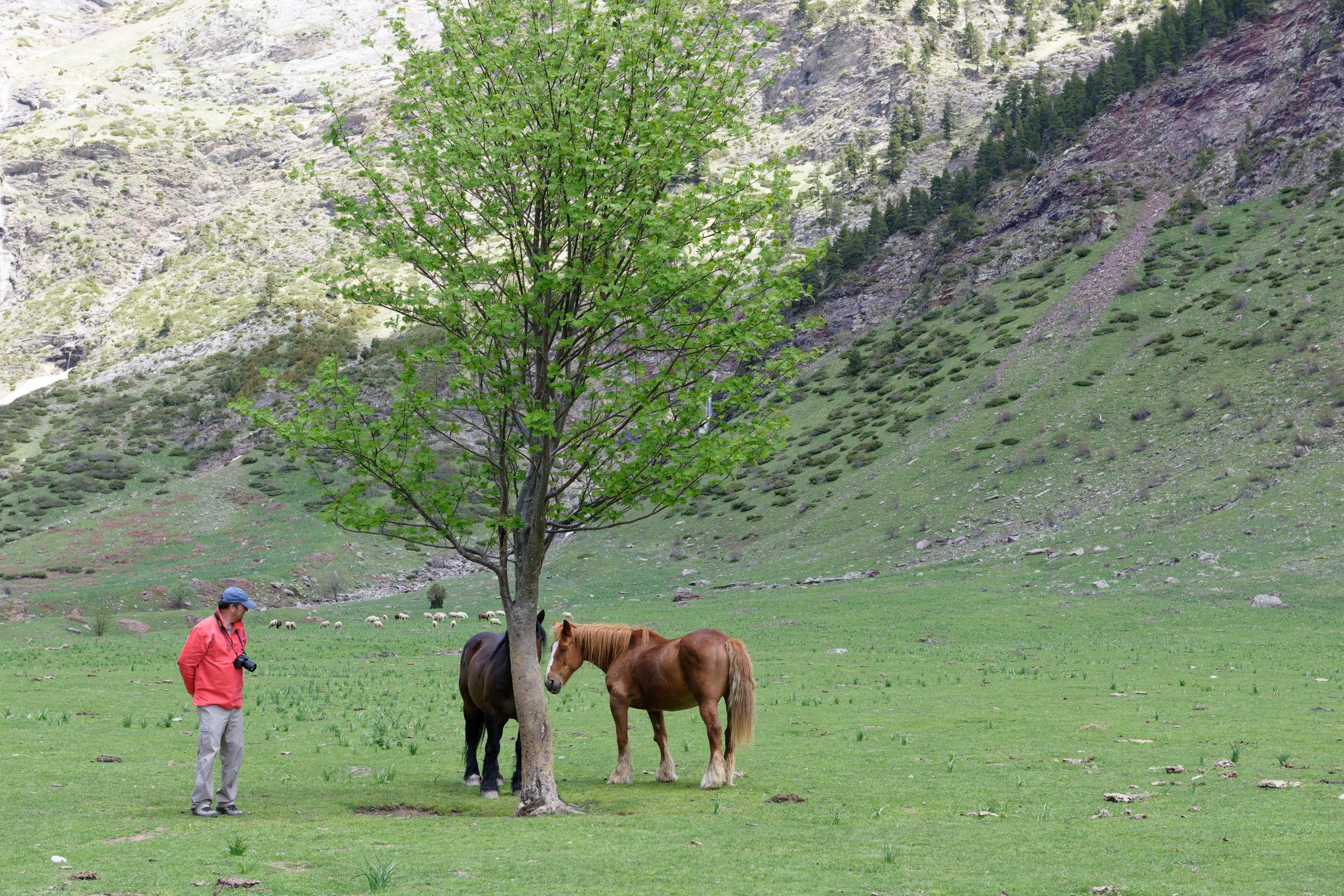 180522-Marche Cascades de la Larri (221) (Valle de Pineta-Sobrarbe-Aragon)