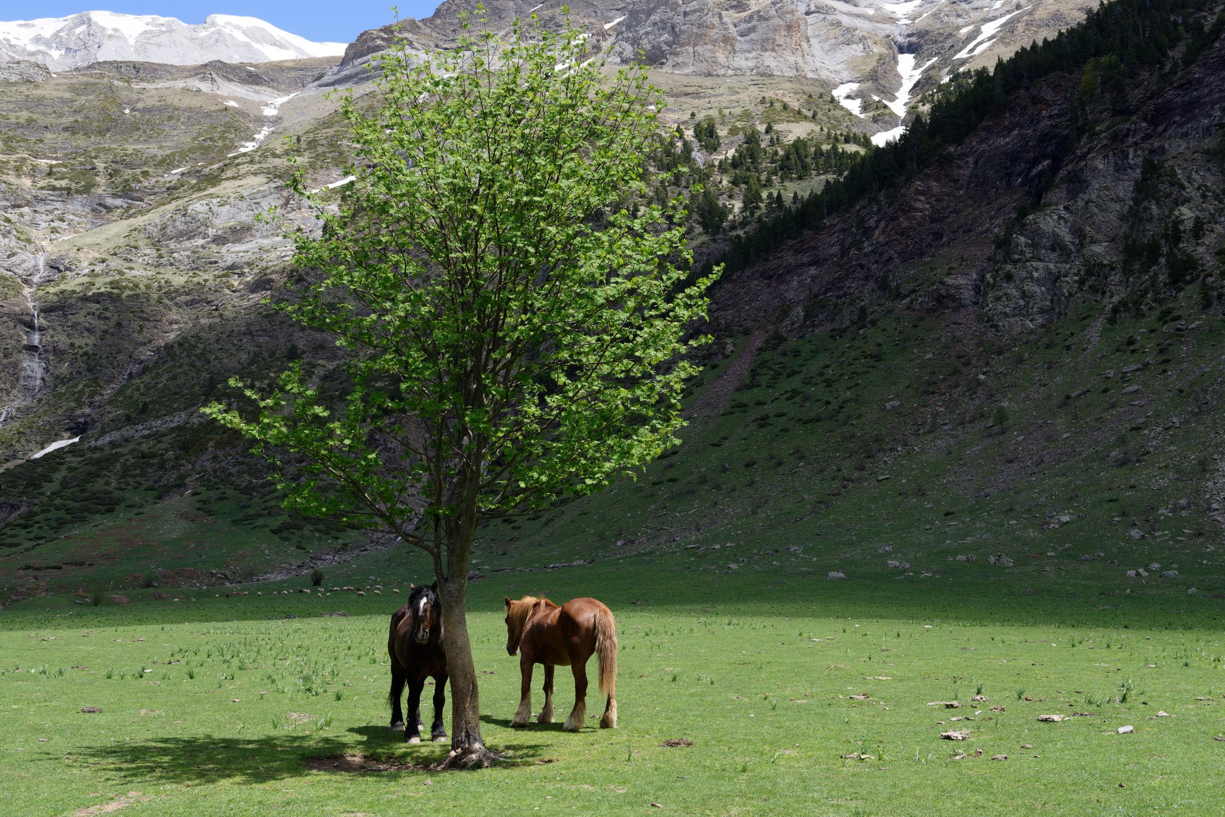 180522-Marche Cascades de la Larri (222) (Valle de Pineta-Sobrarbe-Aragon)