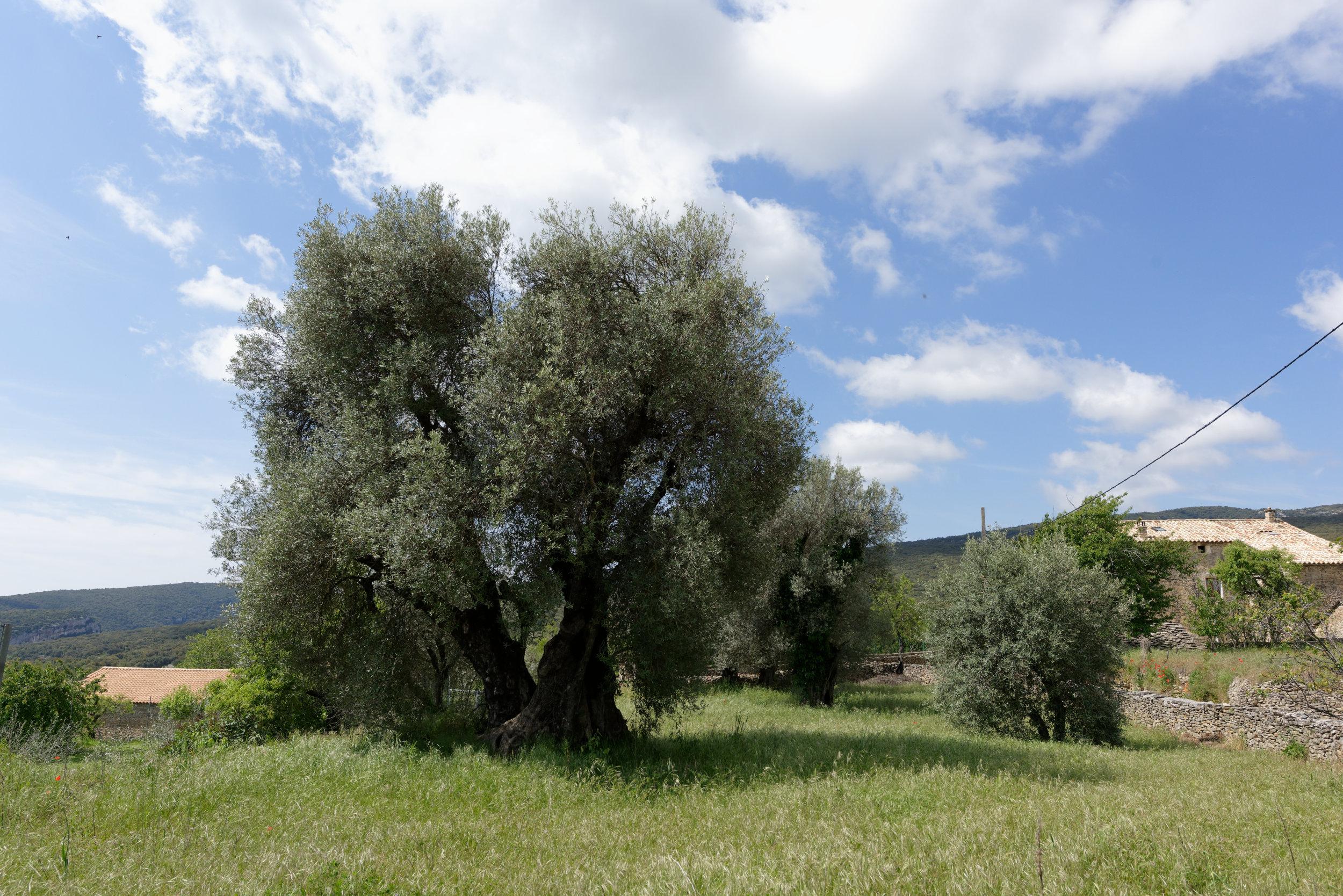 180523-3-Lecina (35) (Sobrarbe-Aragon)