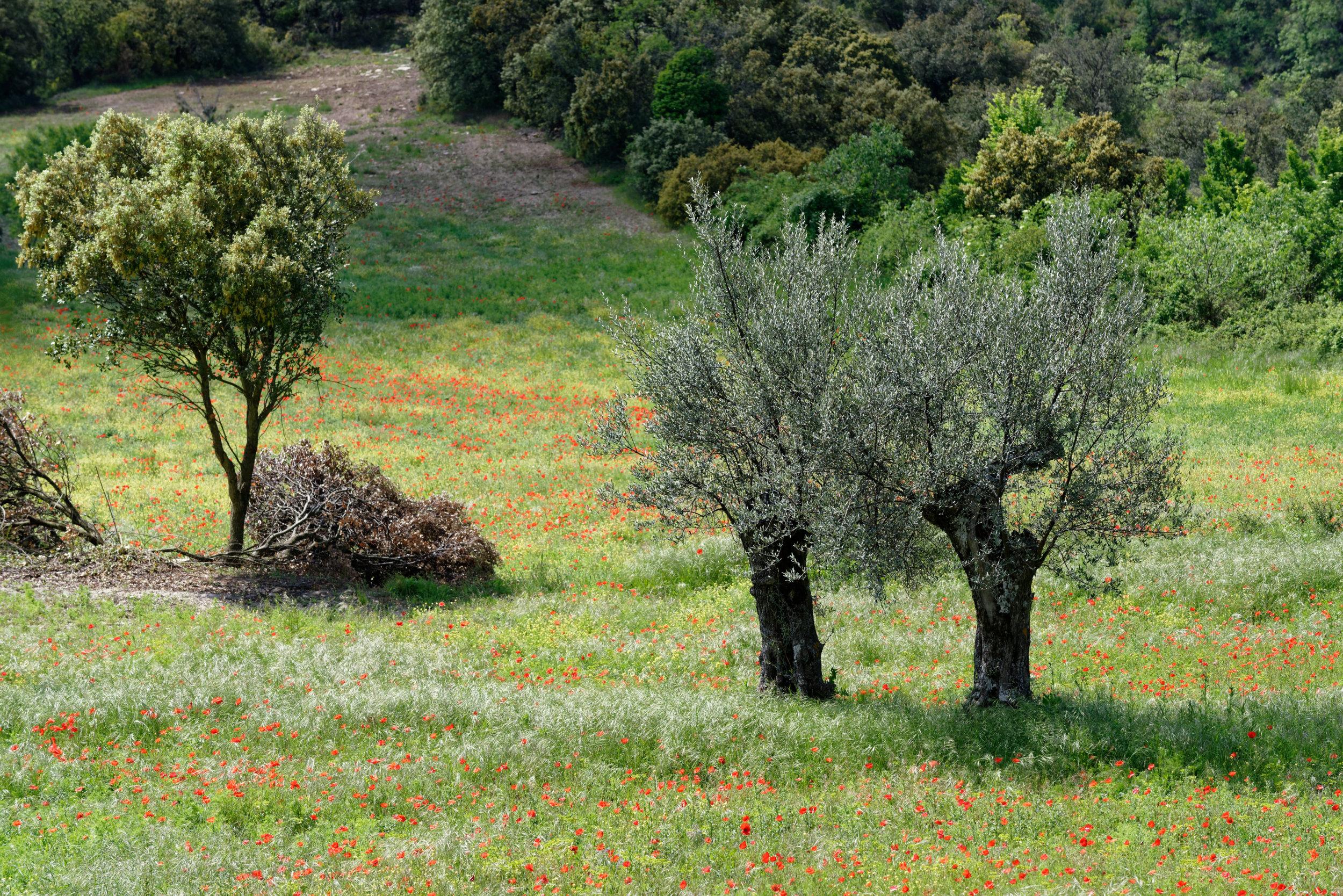 180523-3-Lecina (47) (Sobrarbe-Aragon)