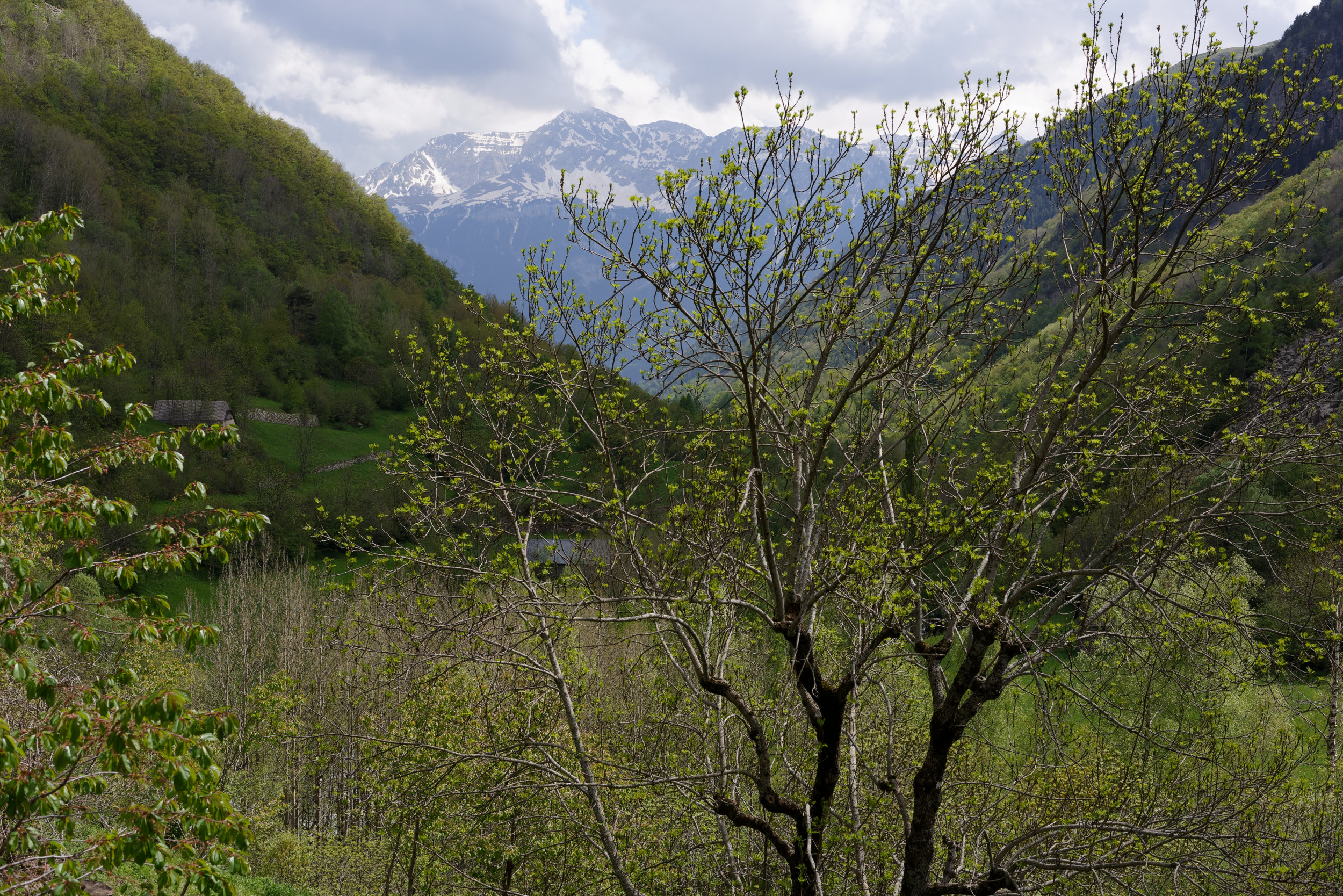 180524-2-Rio Cinqueta (17) (Valle de Chistau-Sobrarbe-Aragon)