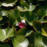 180730-1-Jardin des plantes (Bordeaux Bastide) (14)_1