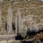181219-(200) Marche Las Bellostas-Bagüeste (Aragon-Somontano)