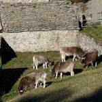 181220-(105) Tella (Aragon-Sobrarbe)