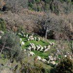 181220-(143) Puertolas (Aragon-Sobrarbe)